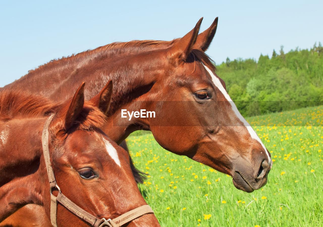 Close-Up Of Horses Grassy Field