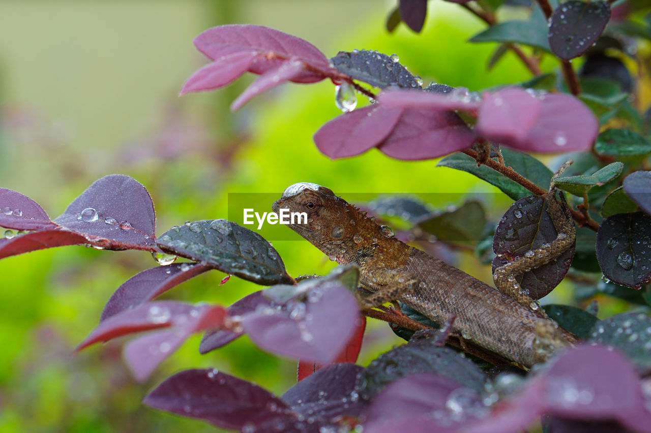 Close-up of water drops on purple flowering plant
