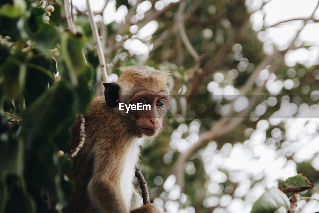 Portrait Of Monkey Sitting On Tree