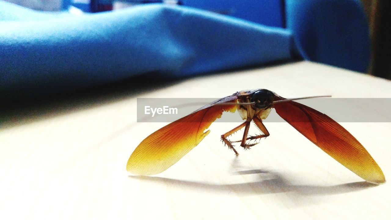 insect, invertebrate, animal themes, one animal, animal, animal wildlife, animals in the wild, close-up, no people, animal wing, shadow, indoors, table, focus on foreground, day, sunlight, nature, zoology, fly, bed