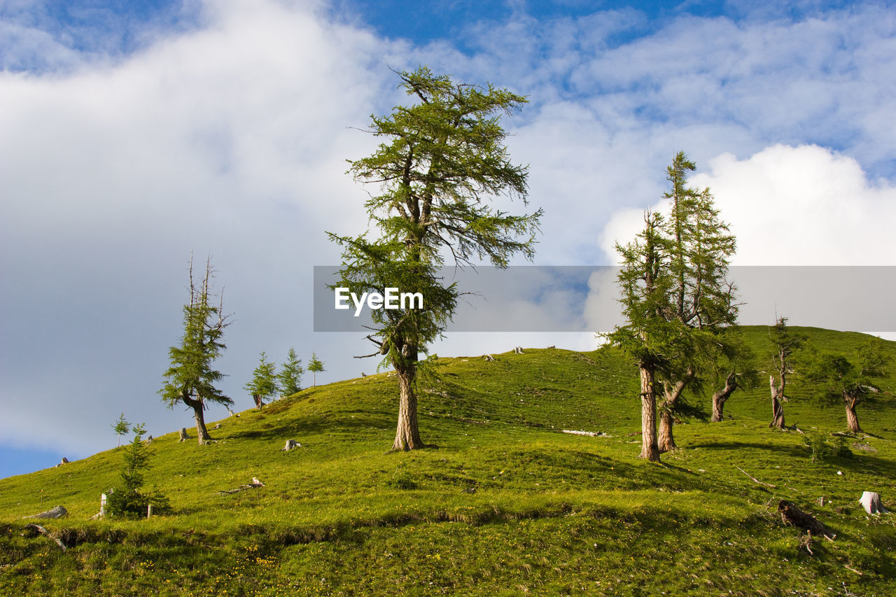 green color, nature, cloud - sky, tranquil scene, tranquility, sky, beauty in nature, grass, landscape, tree, growth, no people, scenics, day, field, outdoors, low angle view, travel destinations