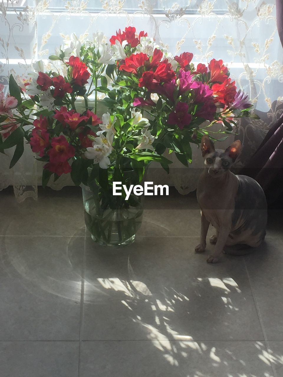 High angle view of cat sitting by flowers in vase on floor