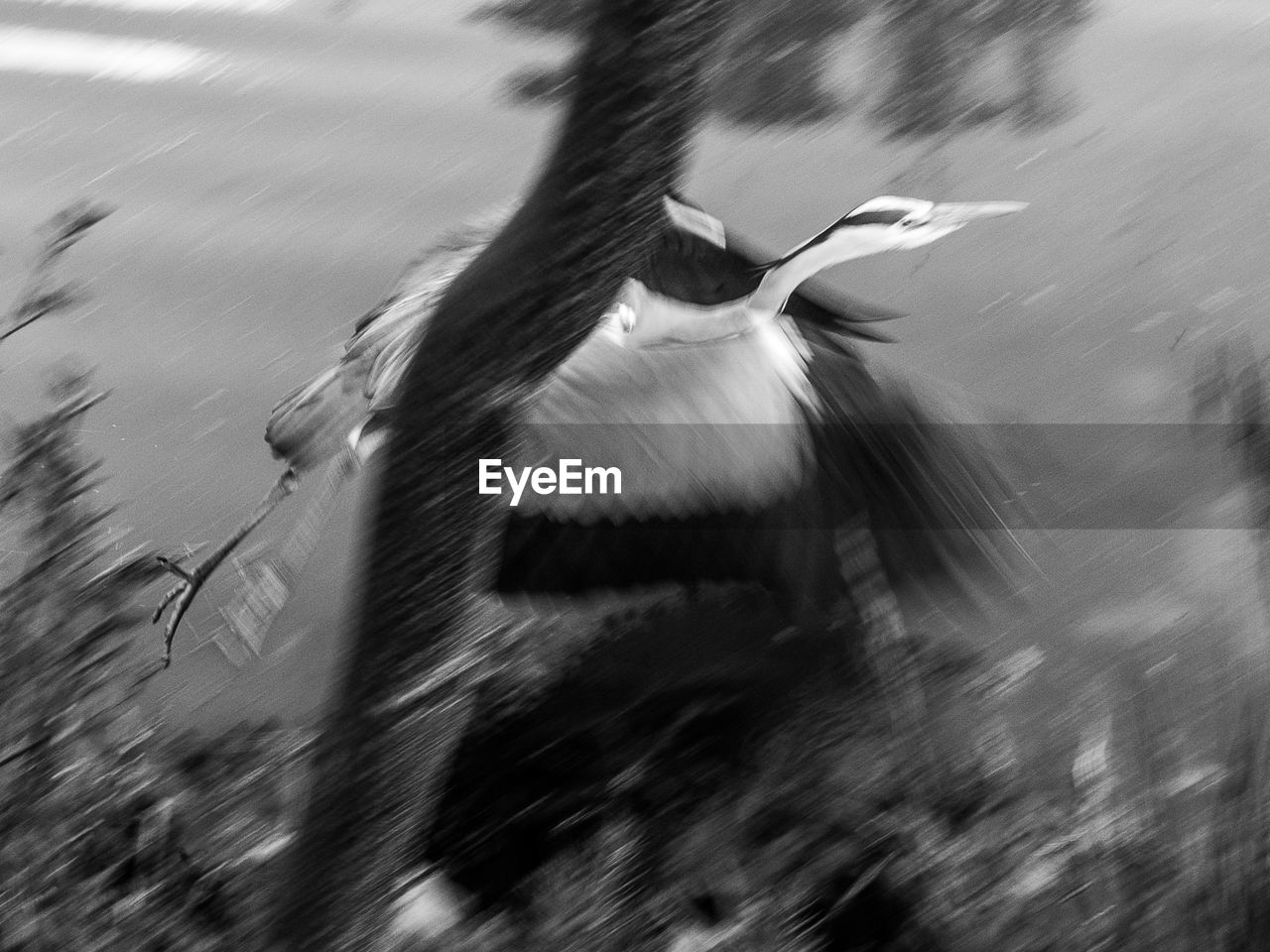 blurred motion, animal themes, one animal, motion, animals in the wild, bird, day, spread wings, outdoors, animal wildlife, nature, no people, flying, water, close-up