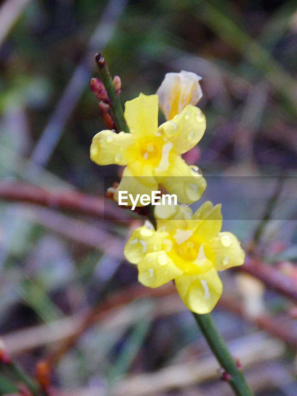 flower, yellow, fragility, petal, beauty in nature, growth, nature, freshness, flower head, no people, blossom, plant, outdoors, close-up, springtime, day, focus on foreground