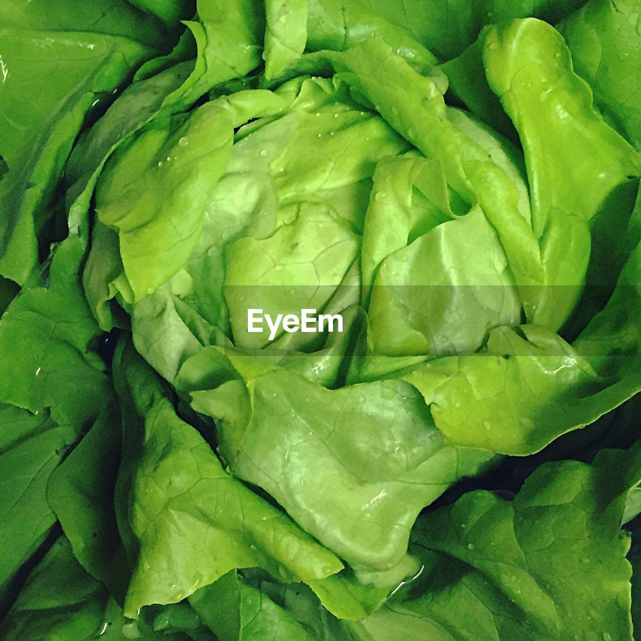 Full Frame Shot Of Wet Lettuce