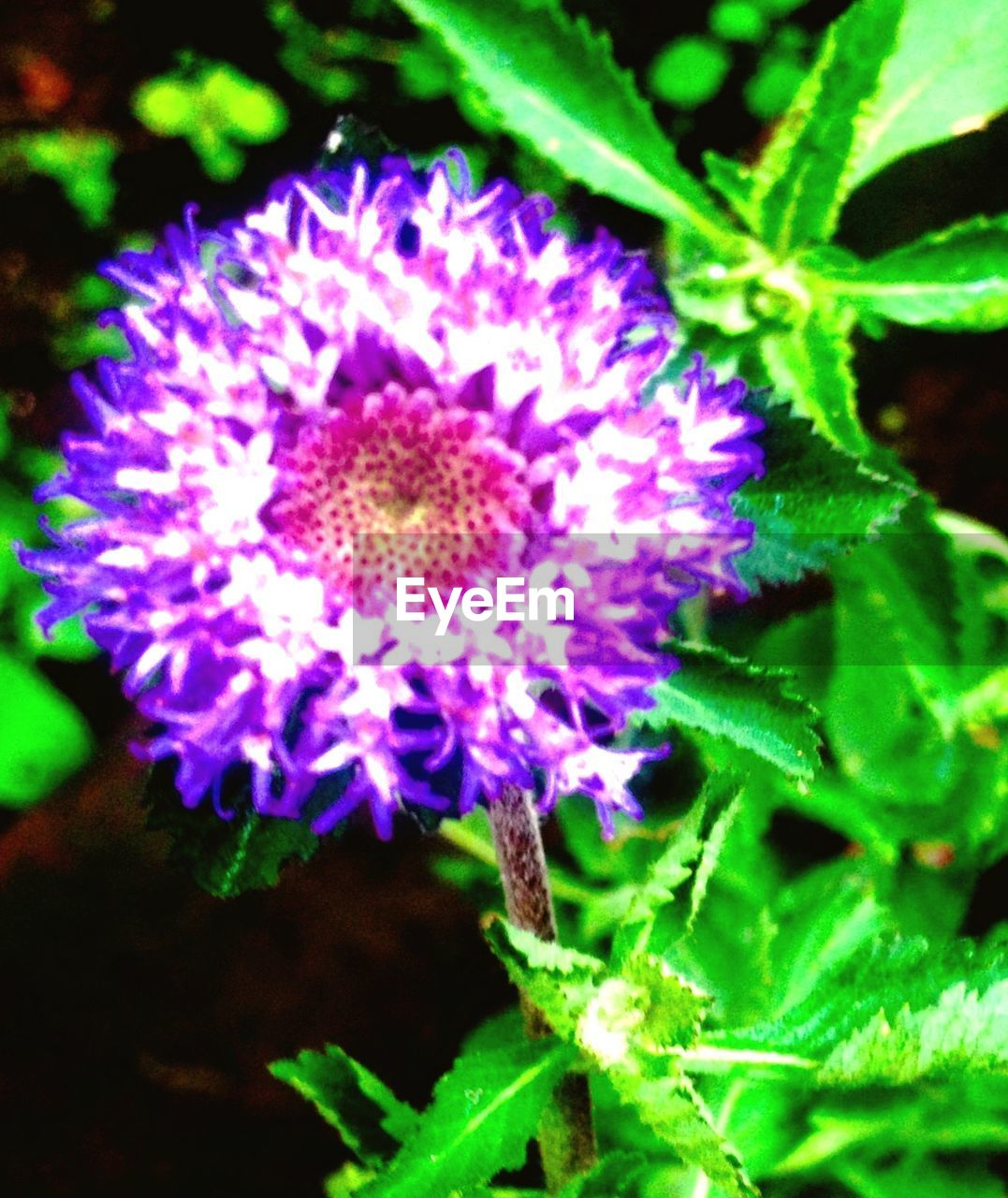flower, purple, nature, beauty in nature, growth, fragility, plant, freshness, petal, flower head, no people, close-up, blooming, outdoors, day