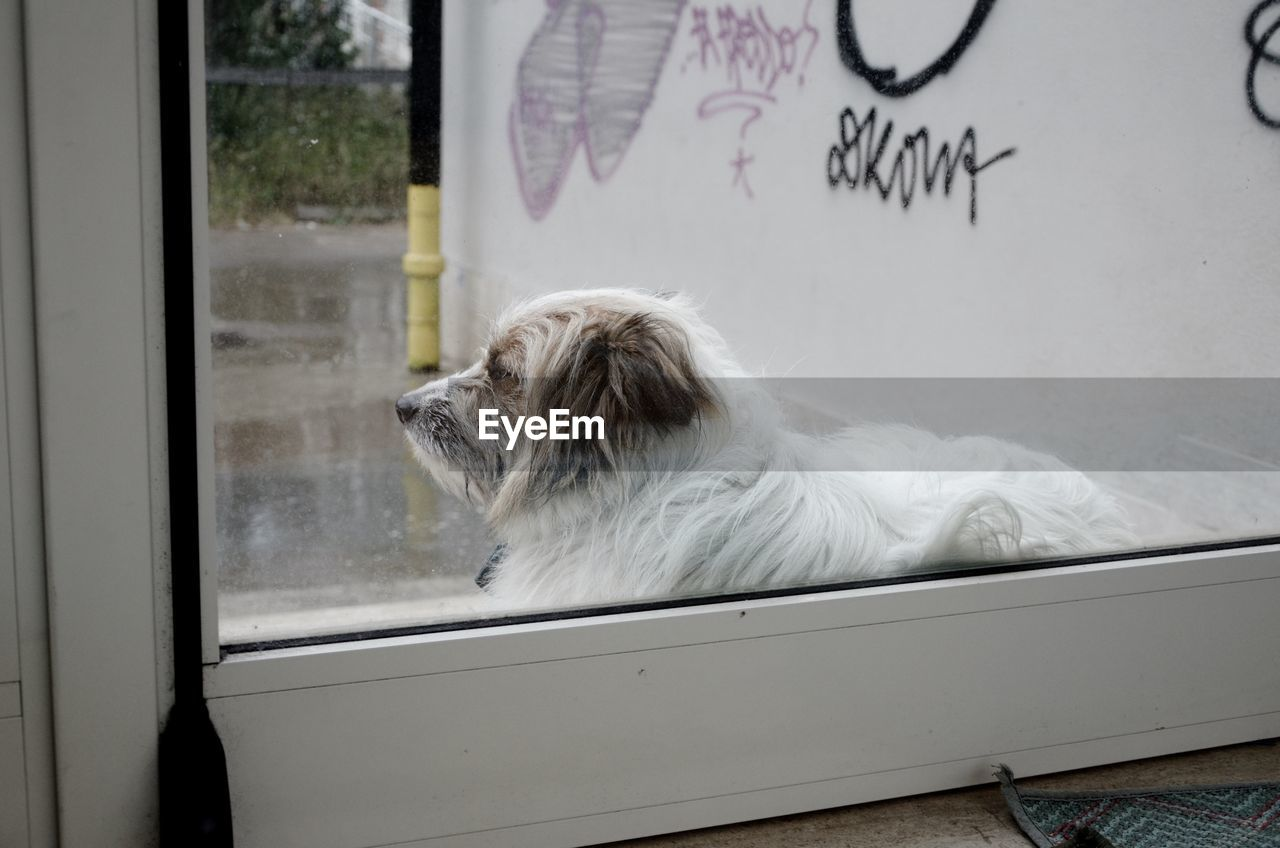 DOG LOOKING AWAY WHILE STANDING ON WINDOW