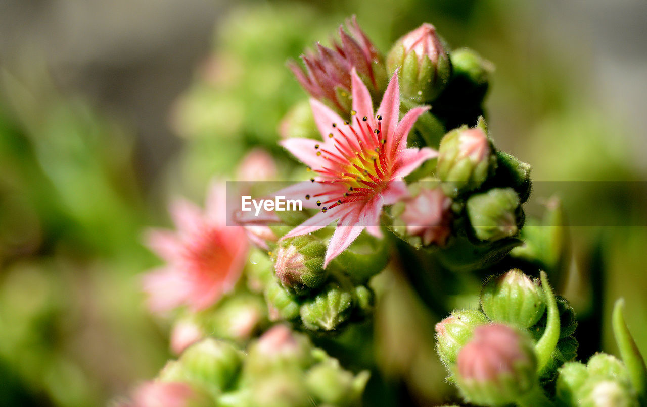 growth, selective focus, nature, plant, flower, beauty in nature, no people, green color, freshness, close-up, outdoors, fragility, day, flower head