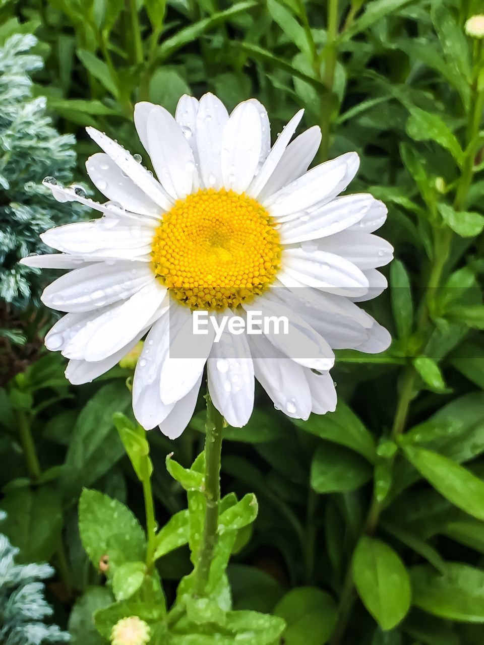 flower, nature, growth, beauty in nature, plant, petal, fragility, white color, freshness, blooming, flower head, outdoors, no people, close-up, day