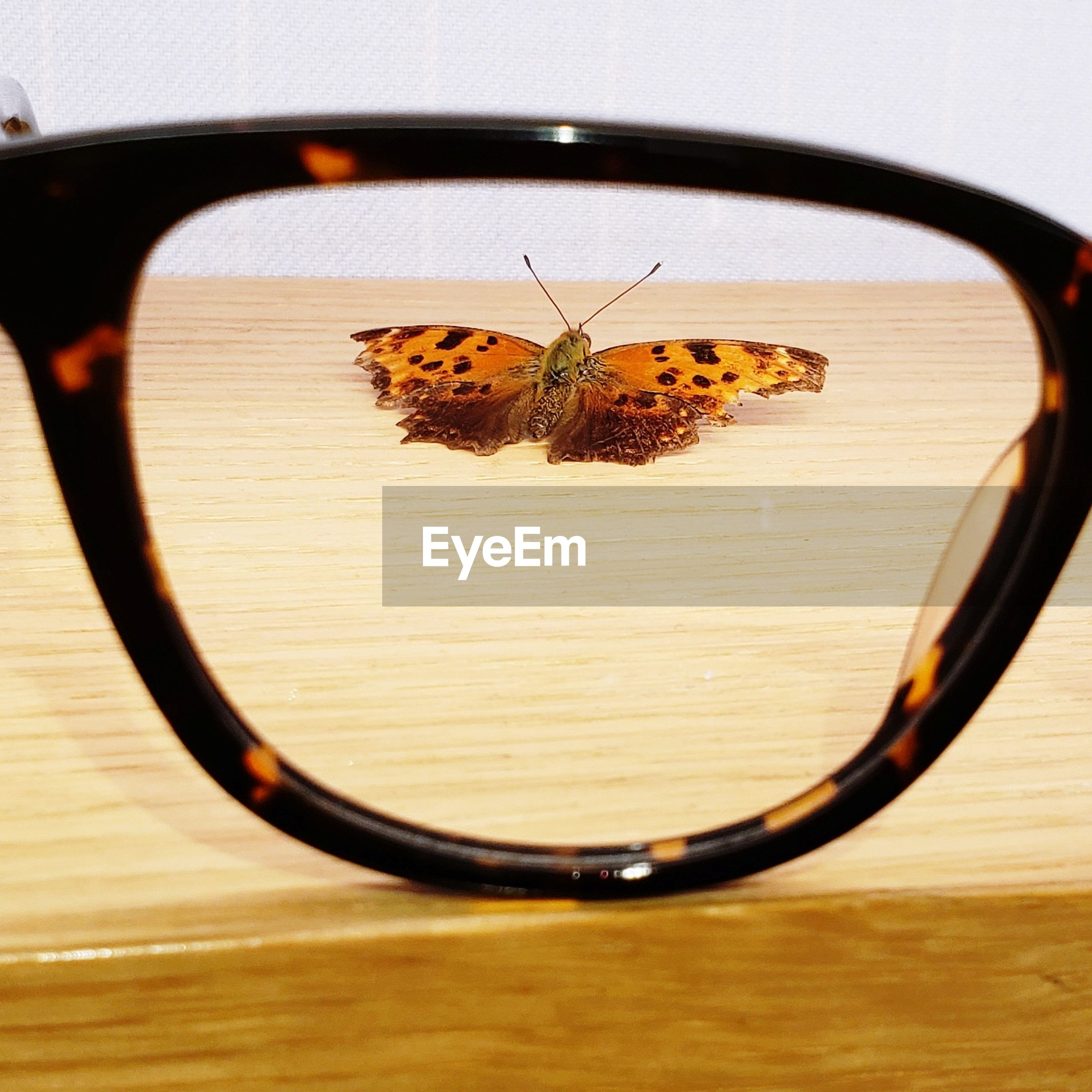 Butterfly on table seen through eyeglasses
