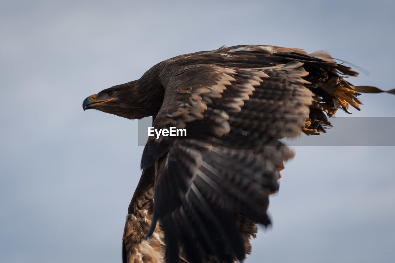 Low angle view of eagle against sky