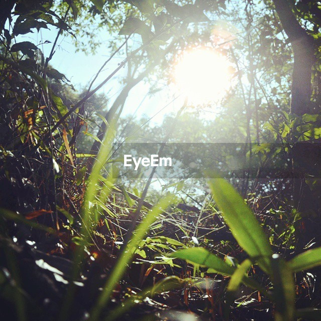 plant, sunlight, growth, tree, nature, beauty in nature, sunbeam, land, lens flare, tranquility, day, green color, sun, no people, forest, sunny, sky, grass, tranquil scene, outdoors, bright, brightly lit, streaming, blade of grass