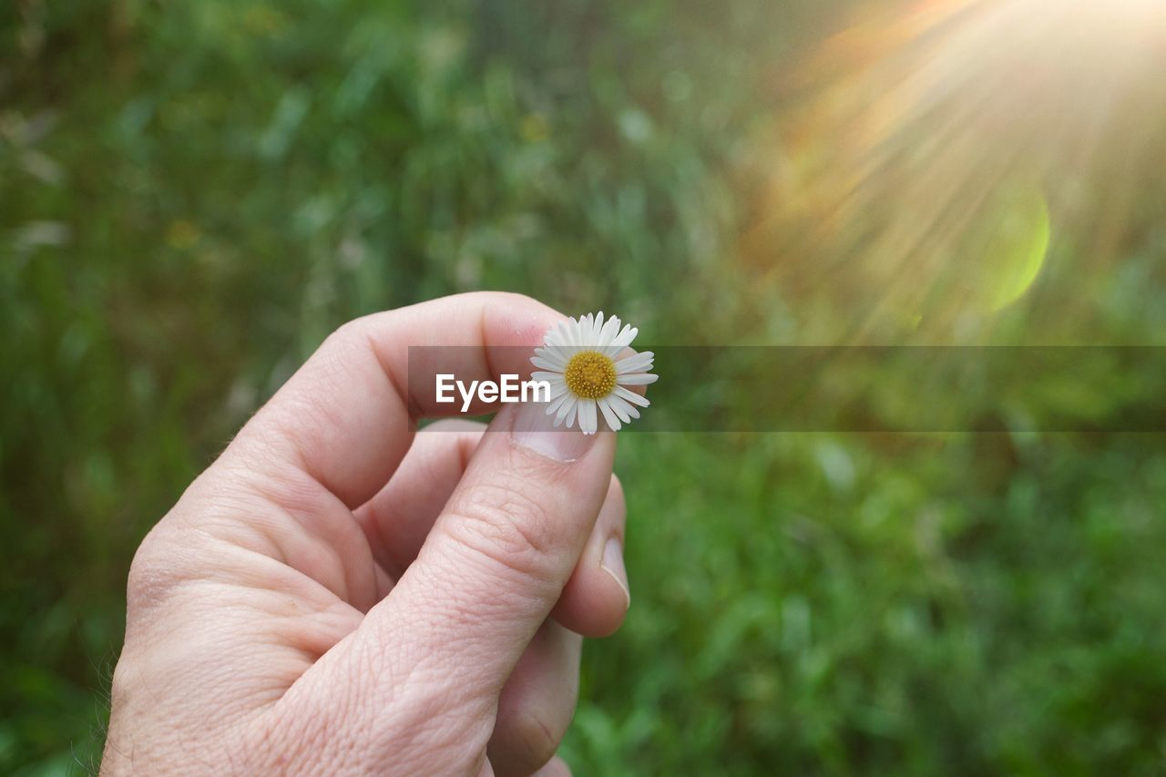flower, flowering plant, human hand, hand, plant, freshness, fragility, holding, vulnerability, one person, human body part, nature, beauty in nature, unrecognizable person, close-up, real people, day, focus on foreground, personal perspective, flower head, body part, finger, outdoors