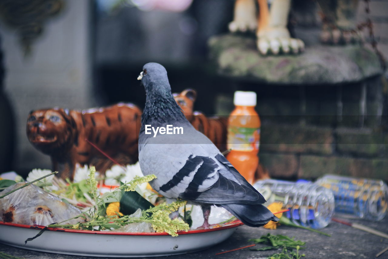 food, food and drink, plate, focus on foreground, vegetable, container, animal, bottle, vertebrate, day, healthy eating, freshness, no people, wellbeing, table, bird, animal themes, front or back yard, close-up, selective focus