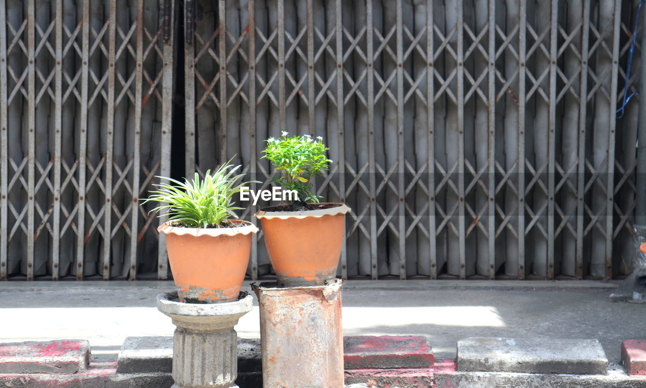 potted plant, growth, day, plant, no people, nature, architecture, metal, outdoors, built structure, close-up, plant part, green color, leaf, fence, botany, barrier, security, boundary, sunlight, flower pot