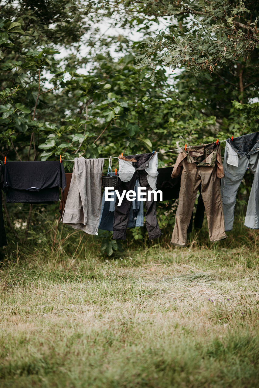 hanging, plant, clothing, laundry, grass, drying, tree, nature, day, clothesline, textile, field, land, no people, growth, pants, outdoors, front or back yard, in a row, side by side, housework, jeans