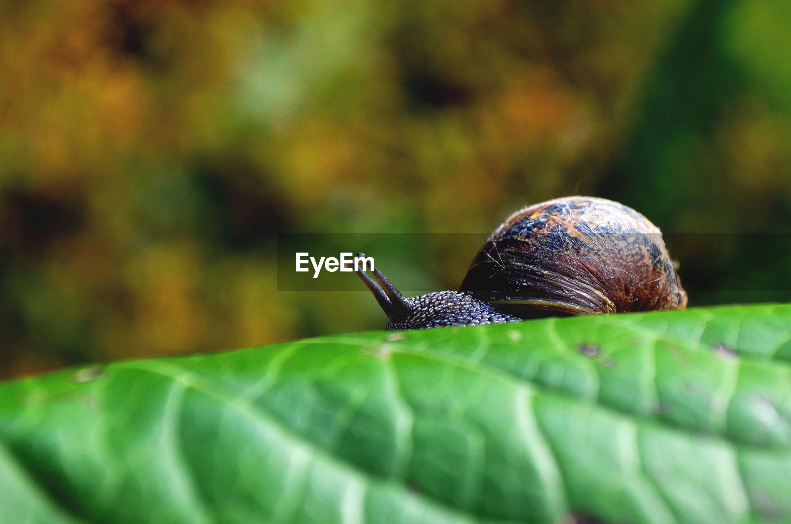 Close-up of snail on leaf at field