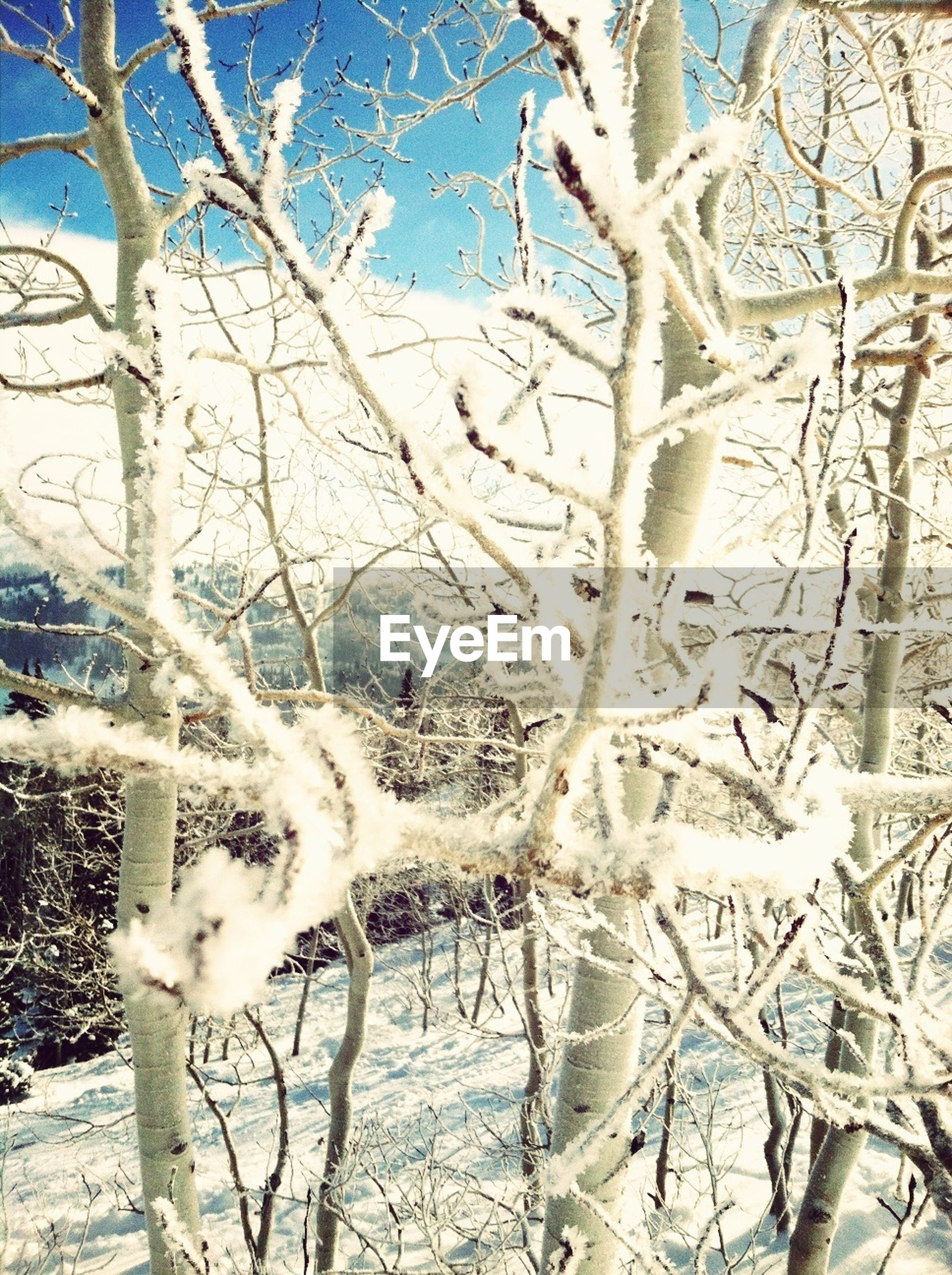 bare tree, winter, snow, cold temperature, branch, tree, white color, nature, frozen, animal themes, season, covering, tranquility, tree trunk, day, no people, field, weather, outdoors, beauty in nature
