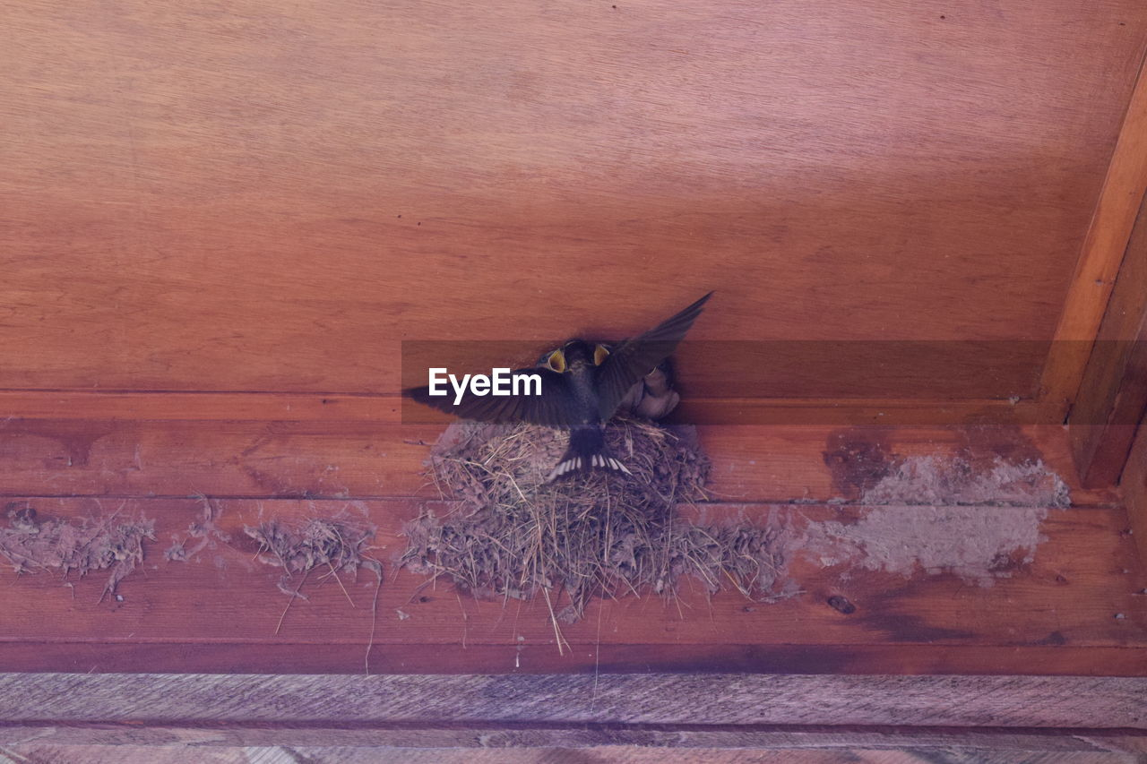 Low Angle View Of Birds In Nest On Ceiling
