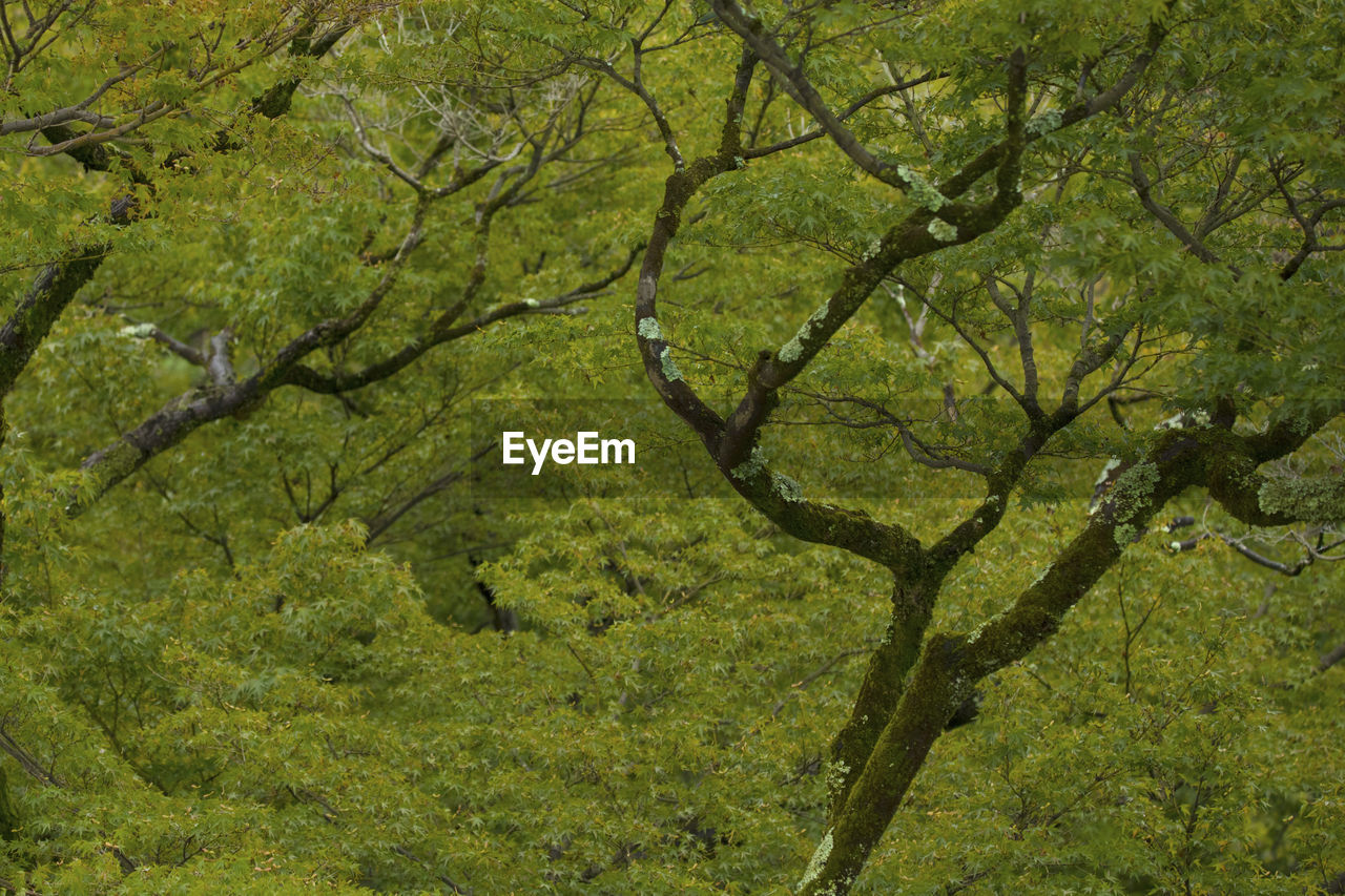tree, nature, branch, forest, no people, green color, outdoors, day, growth, leaf, beauty in nature