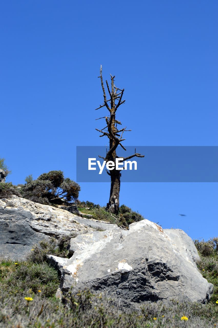 clear sky, blue, nature, rock - object, outdoors, tranquility, no people, day, landscape, tranquil scene, tree, beauty in nature, dead tree, sky