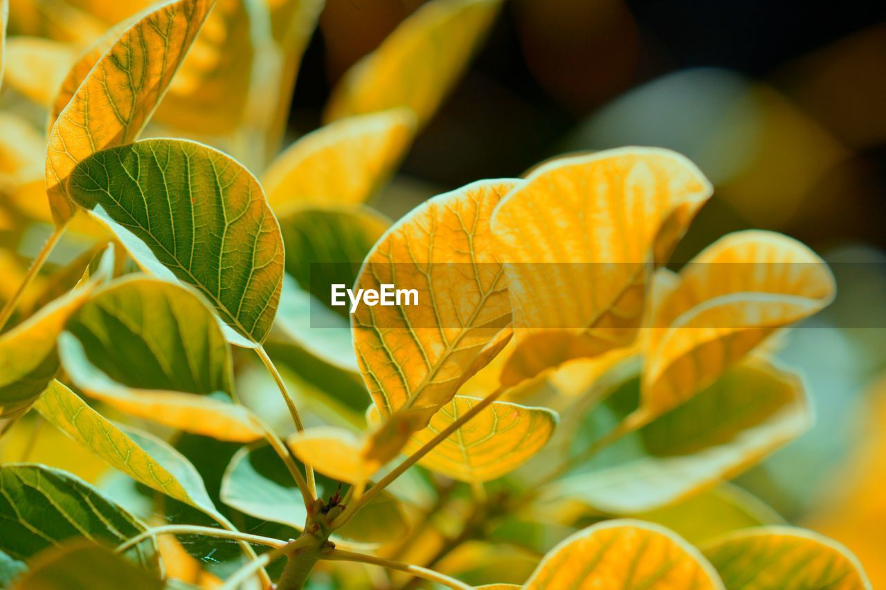 plant part, leaf, growth, plant, close-up, freshness, beauty in nature, no people, yellow, orange color, nature, day, focus on foreground, selective focus, fragility, vulnerability, green color, leaves, food, outdoors, orange