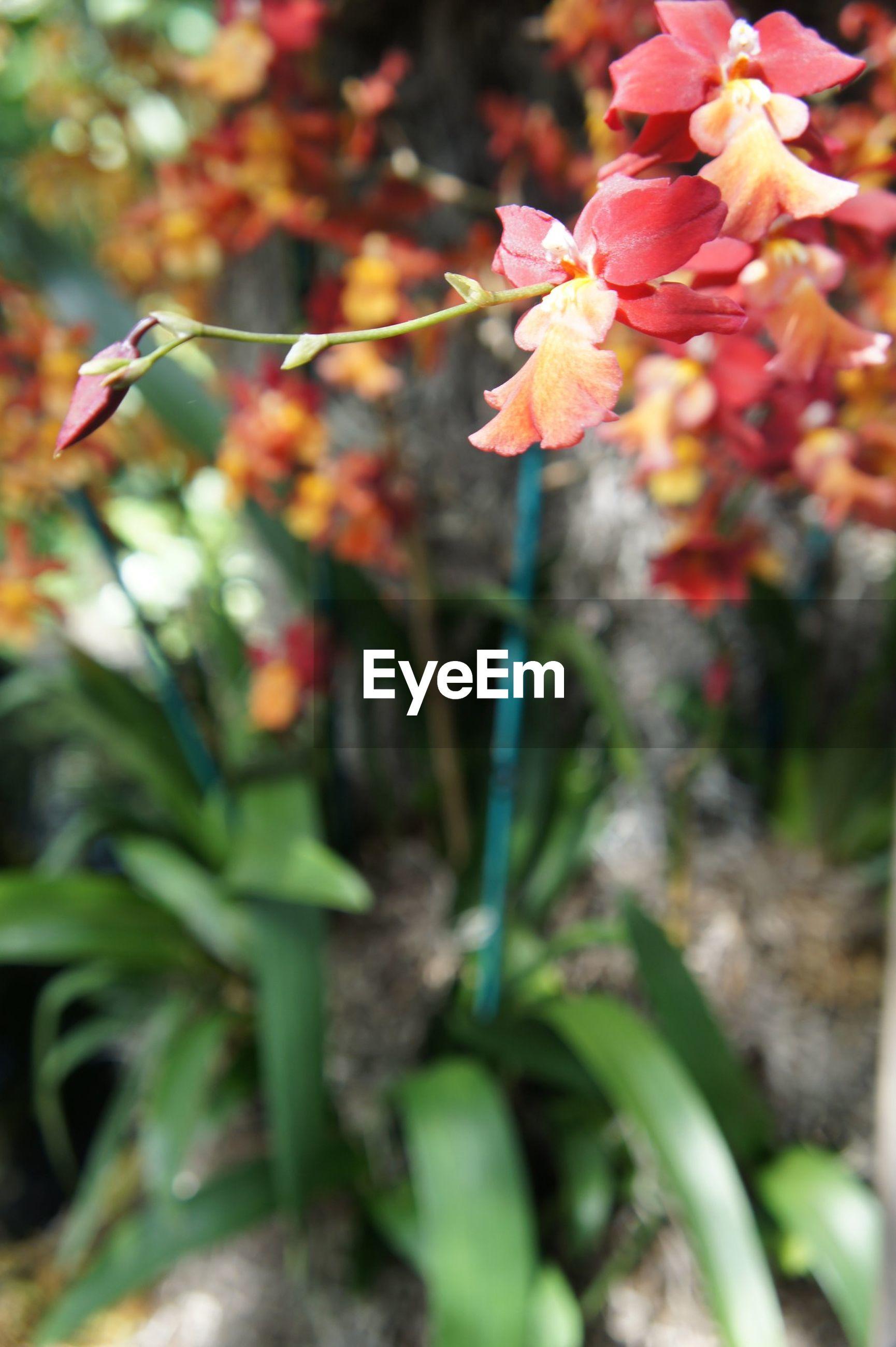 CLOSE-UP OF FRESH FLOWER TREE