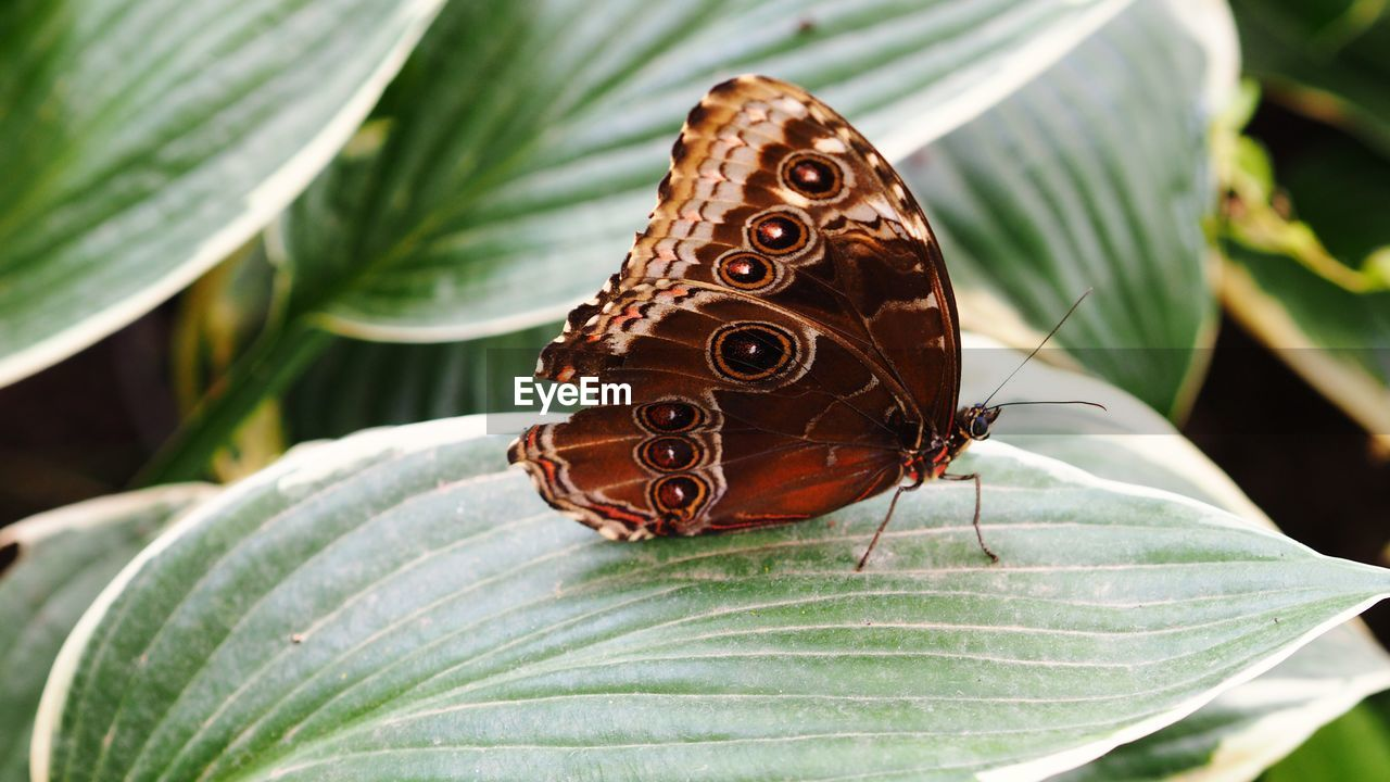 Close-up of butterfly on leaf in garden