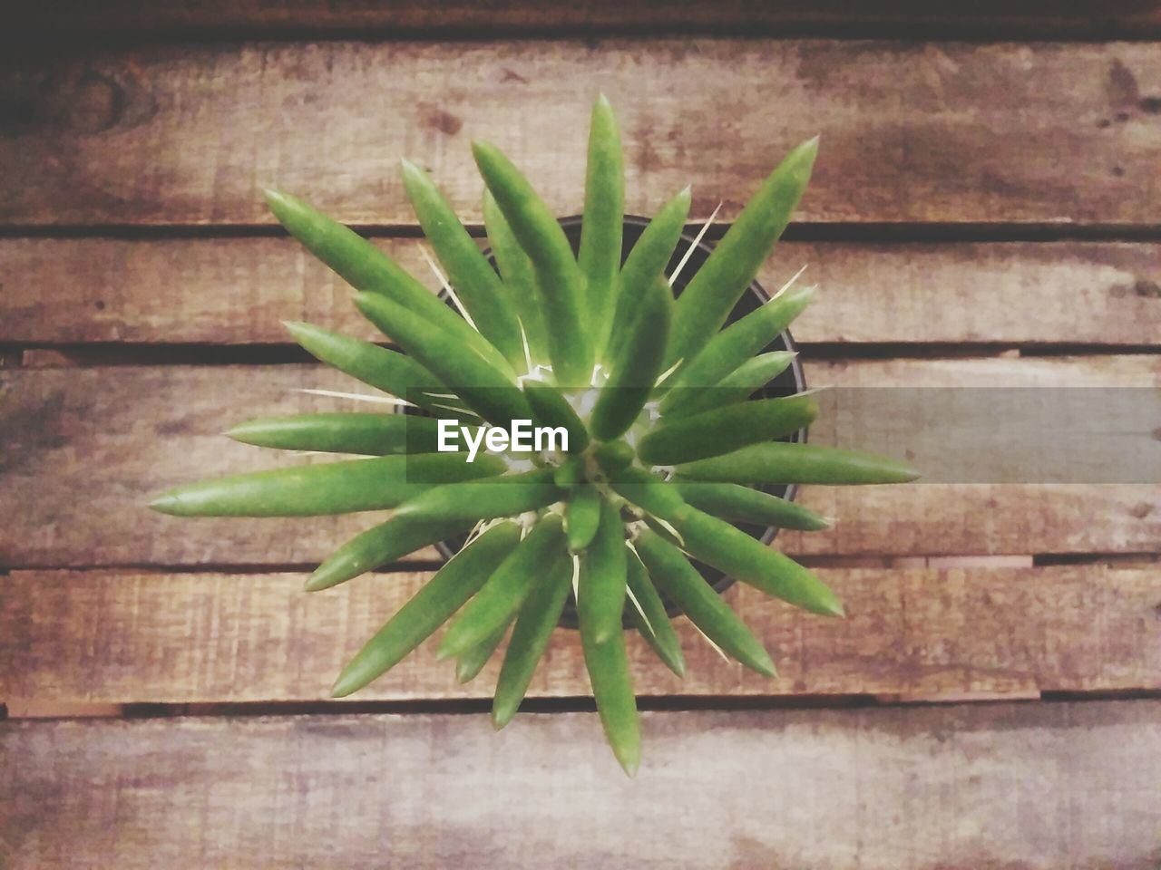 green color, growth, plant, nature, no people, aloe vera plant, wood - material, cactus, indoors, close-up, day, spiked, beauty in nature, freshness, leaf, healthy eating