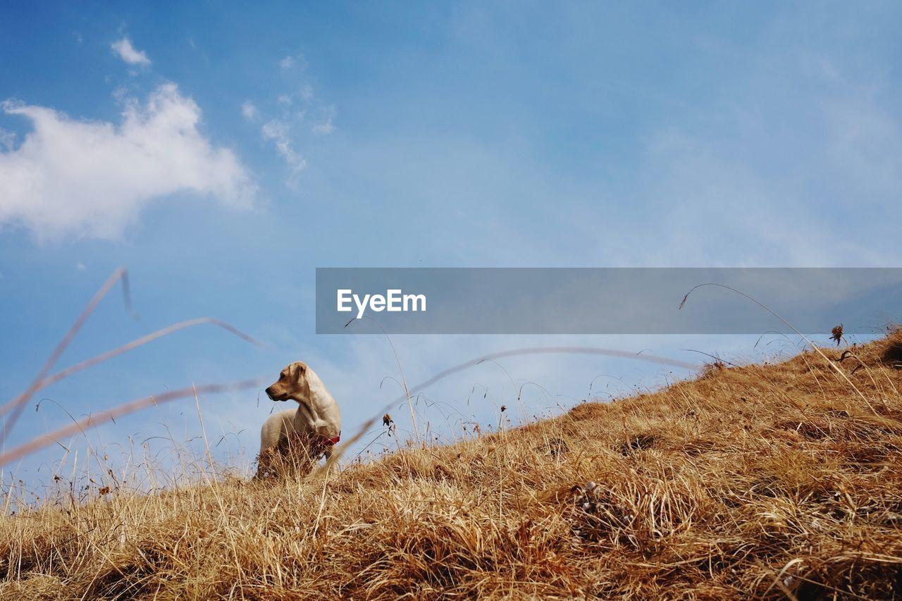 Dog On Grass Against Sky