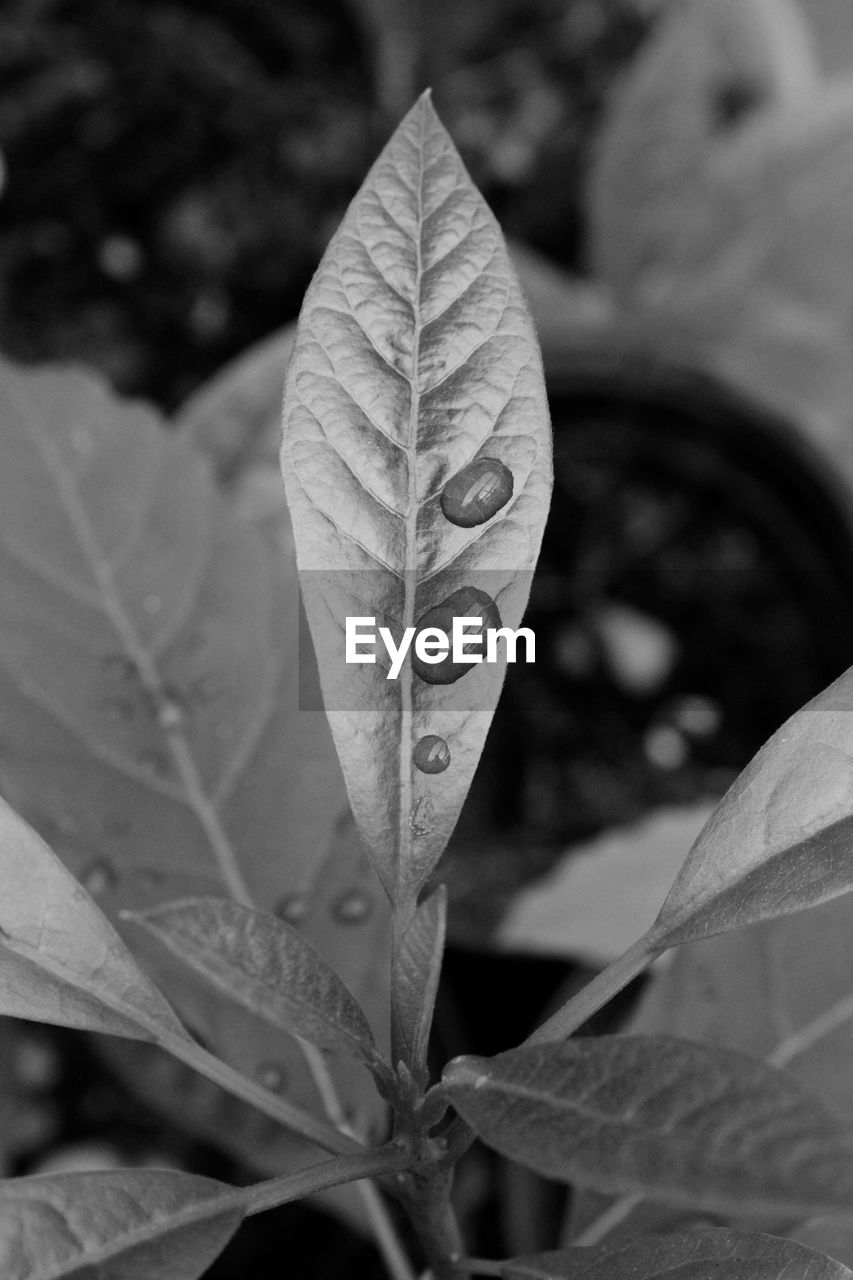 leaf, focus on foreground, close-up, day, nature, outdoors, growth, change, autumn, no people, plant, fragility, beauty in nature, maple