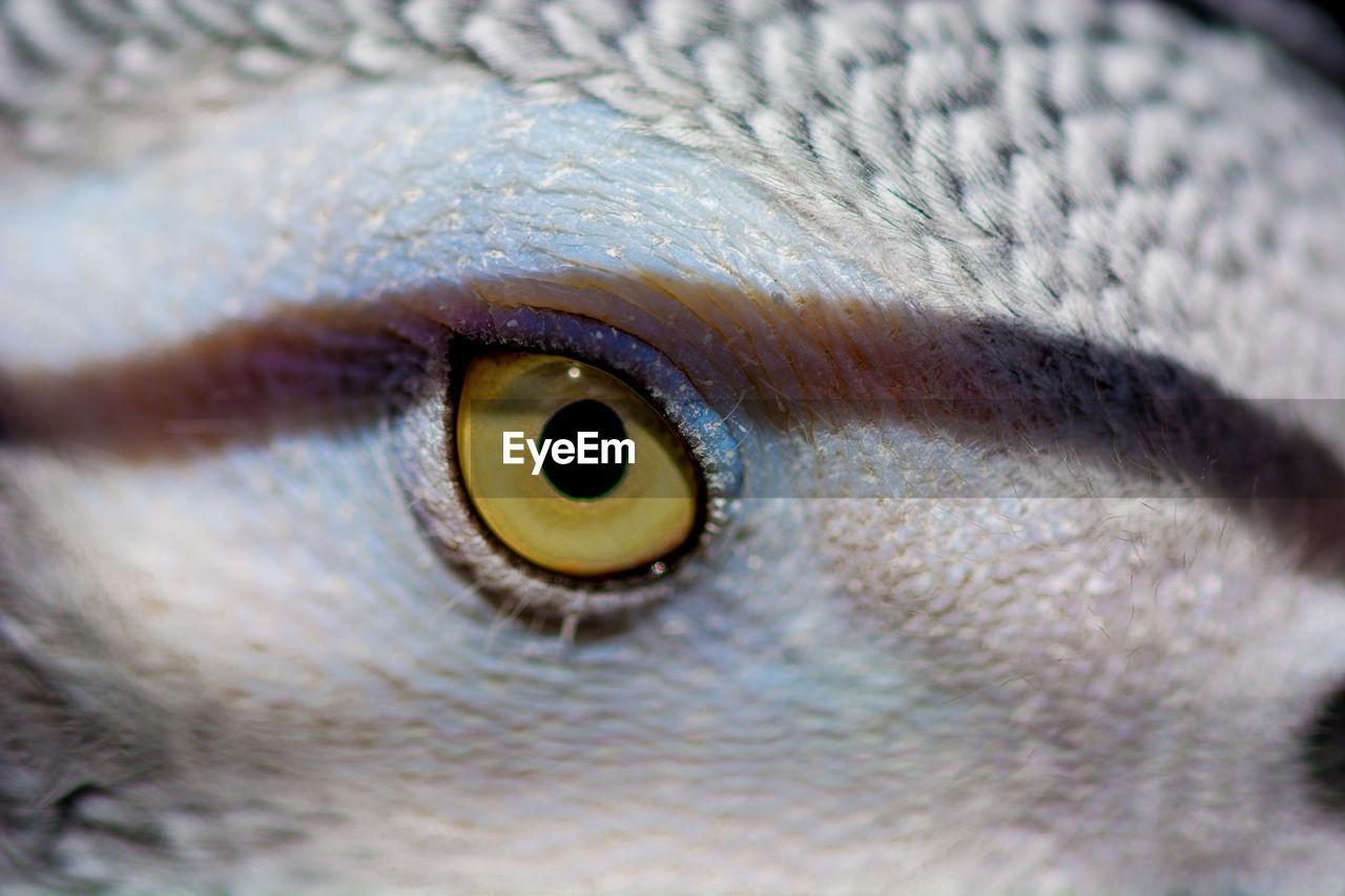animal eye, eye, close-up, one animal, eyeball, animal head, human eye, animal body part, eyesight, animal themes, selective focus, portrait, iris - eye, animal wildlife, looking at camera, animals in the wild, day, outdoors, nature, eyelash, undersea, people
