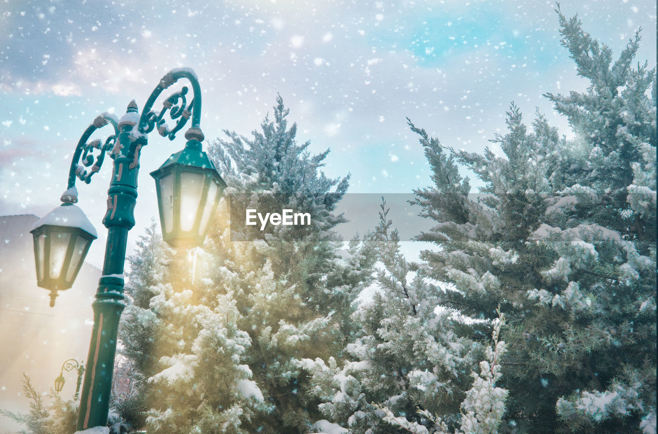 tree, plant, cold temperature, winter, snow, nature, illuminated, sky, no people, street light, lighting equipment, outdoors, christmas tree, beauty in nature, snowing, day, christmas, low angle view, lens flare, fir tree, pine tree, coniferous tree, blizzard
