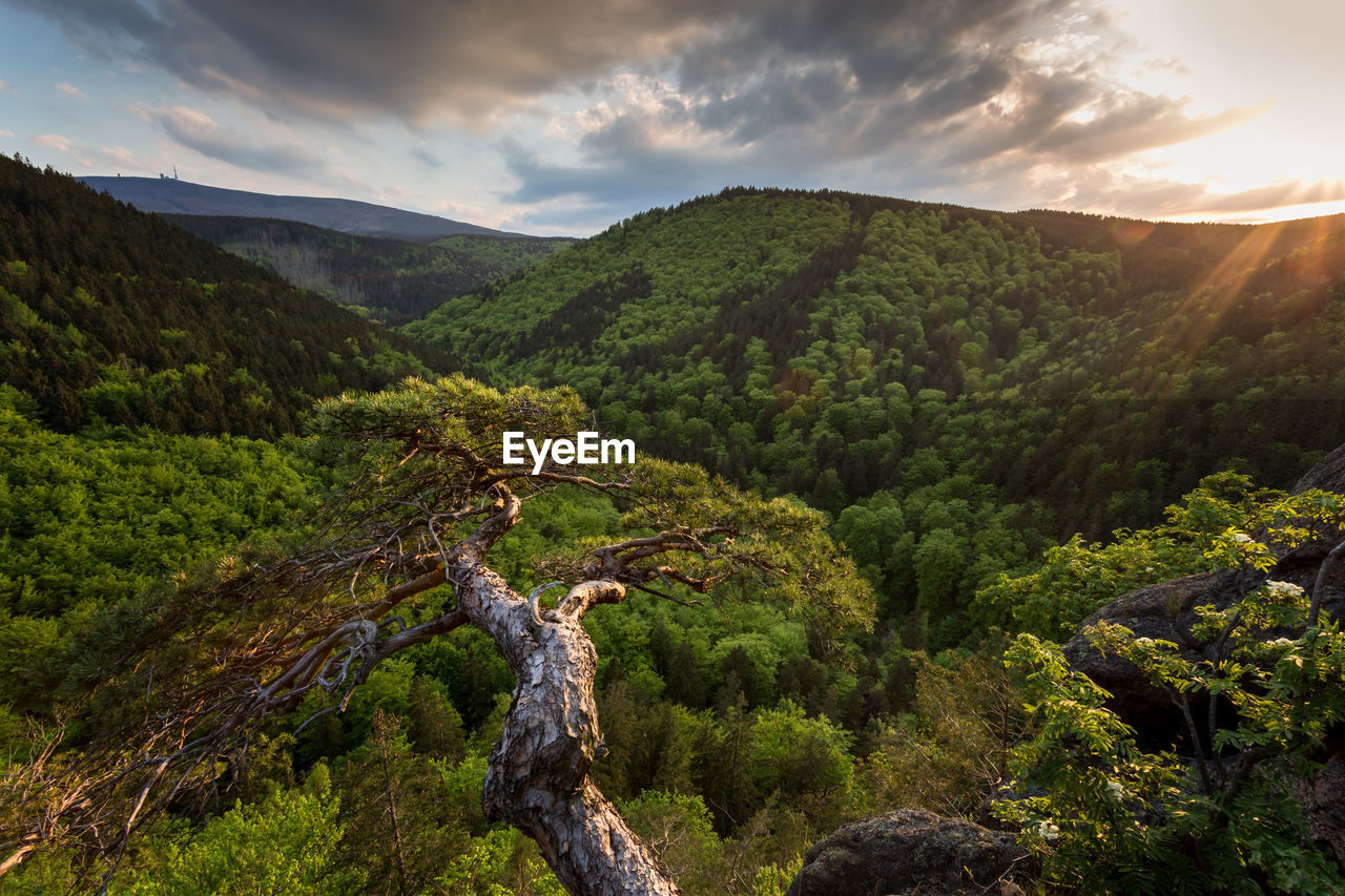 mountain, nature, scenics, tranquil scene, beauty in nature, tranquility, tree, sky, no people, cloud - sky, outdoors, green color, day, mountain range, sunlight, landscape, growth, forest