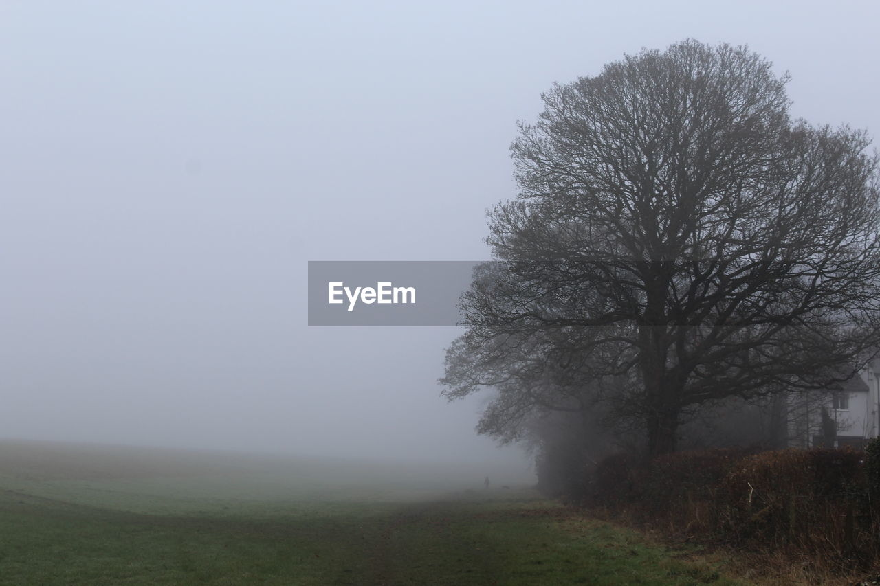 fog, landscape, mist, nature, grass, tranquility, foggy, hazy, field, beauty in nature, tree, tranquil scene, scenics, outdoors, day, growth, no people, sky