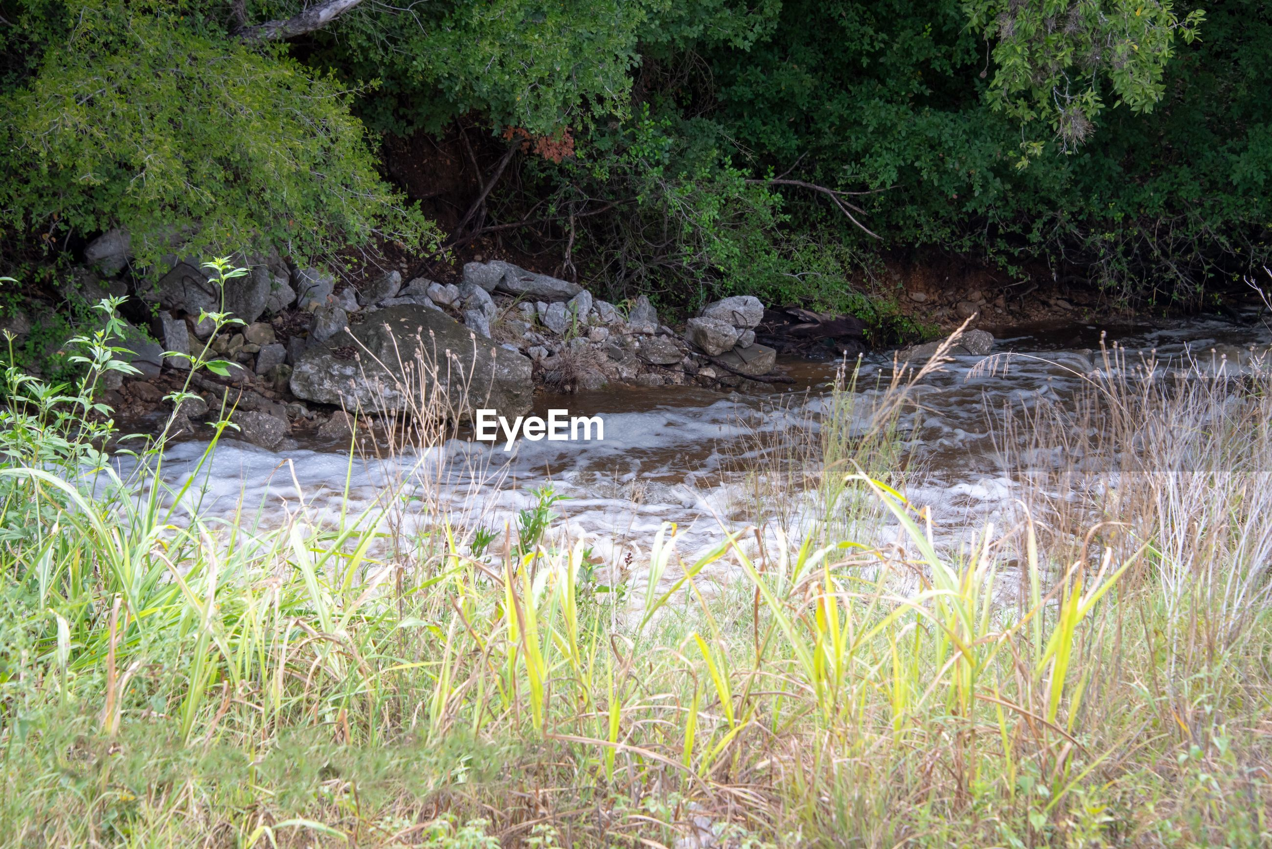 GRASS GROWING IN RIVER
