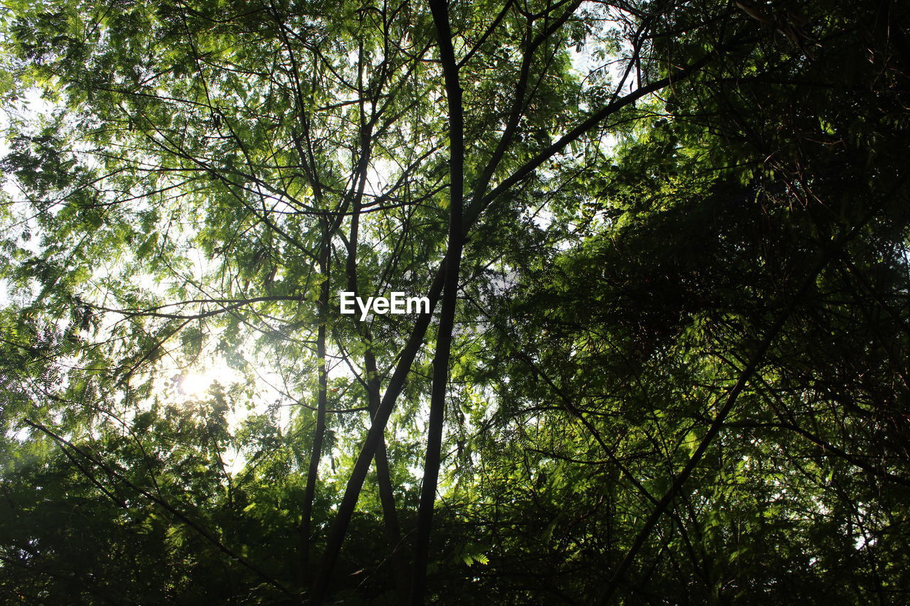 tree, forest, nature, growth, low angle view, day, beauty in nature, tranquility, outdoors, branch, no people