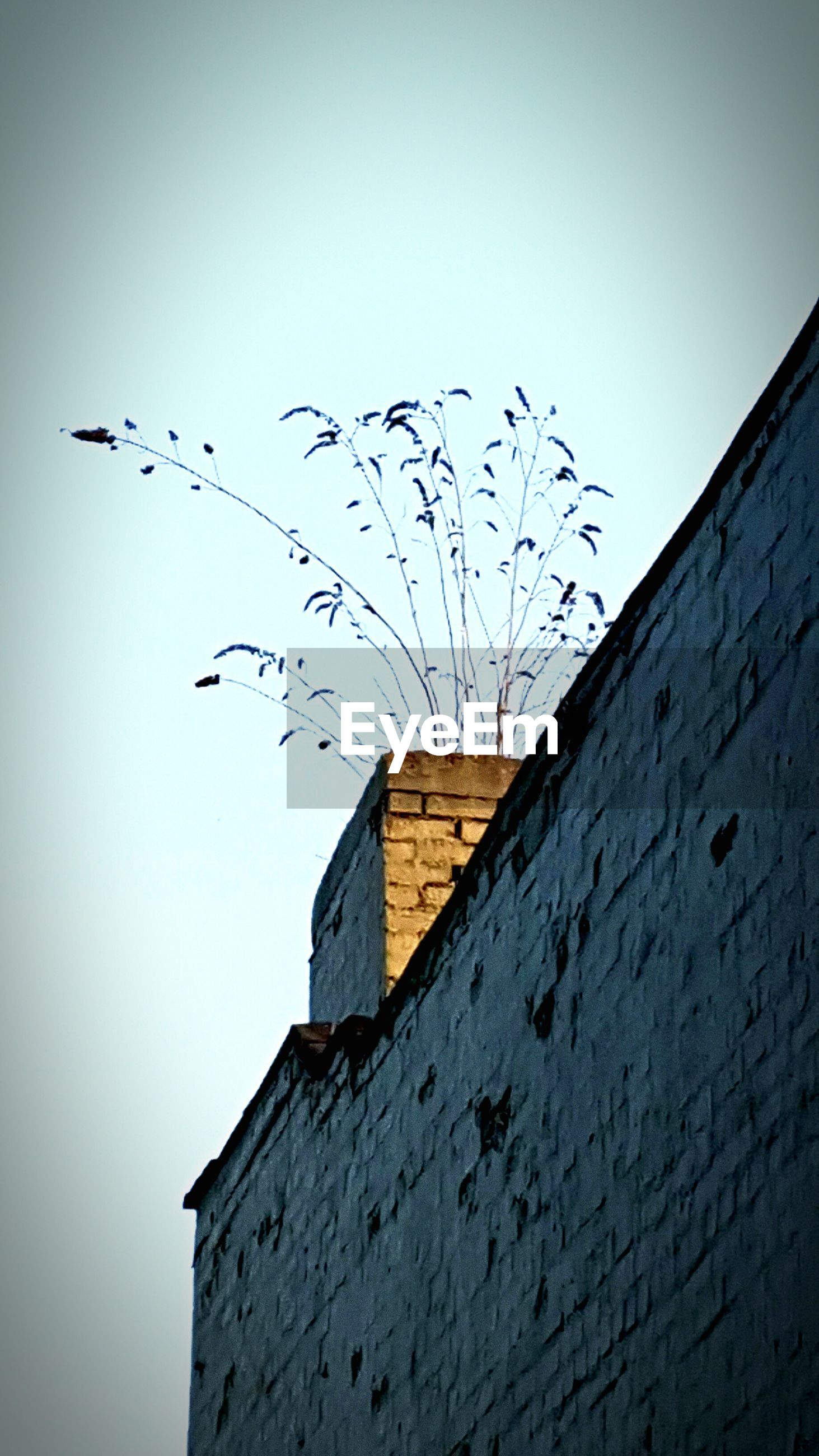 bird, architecture, building exterior, built structure, low angle view, animal themes, clear sky, animals in the wild, wildlife, flying, flock of birds, house, copy space, roof, residential structure, day, residential building, building, outdoors