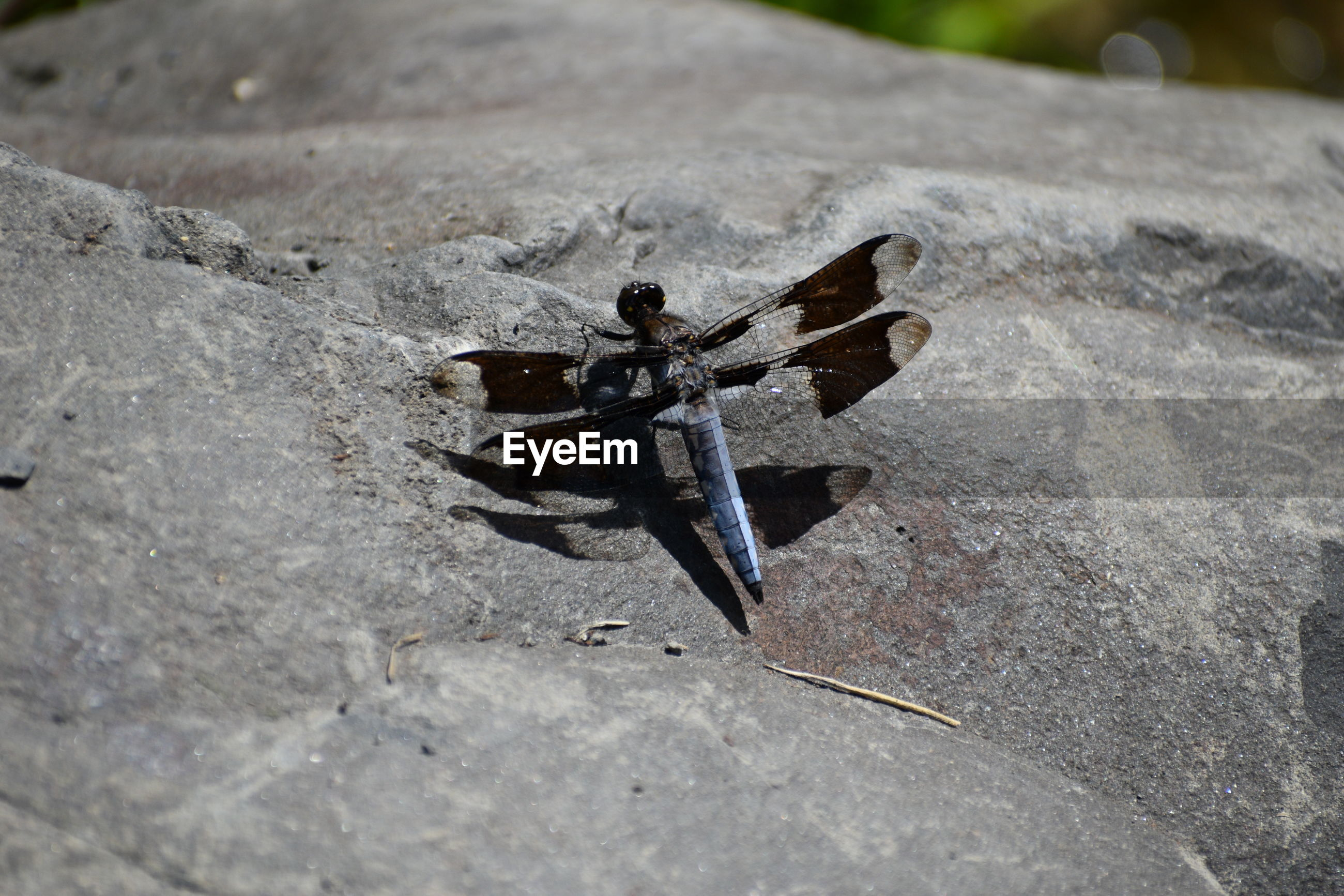 HIGH ANGLE VIEW OF BUTTERFLY ON ROCK