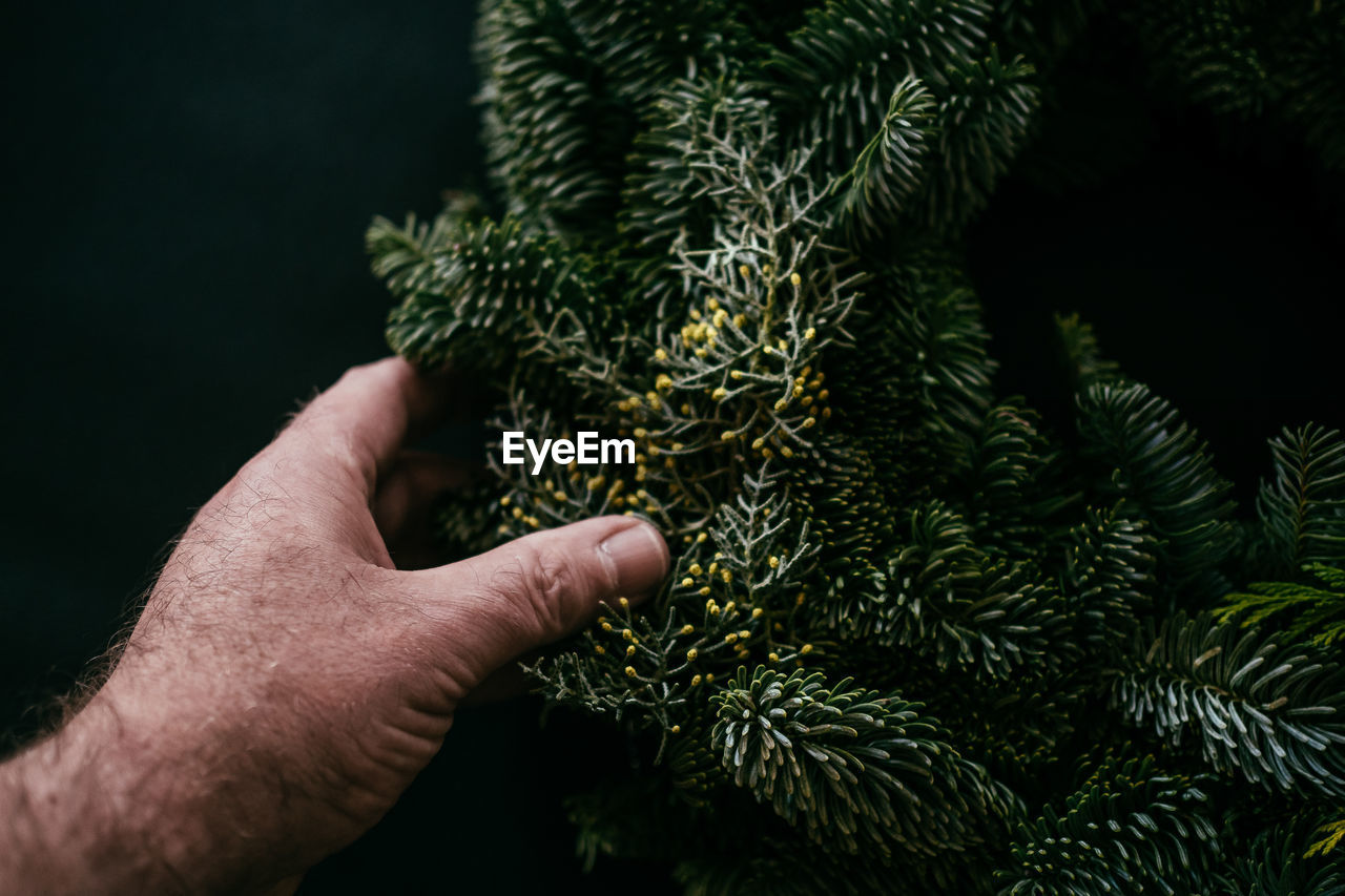 Cropped hand of man holding christmas tree against black background