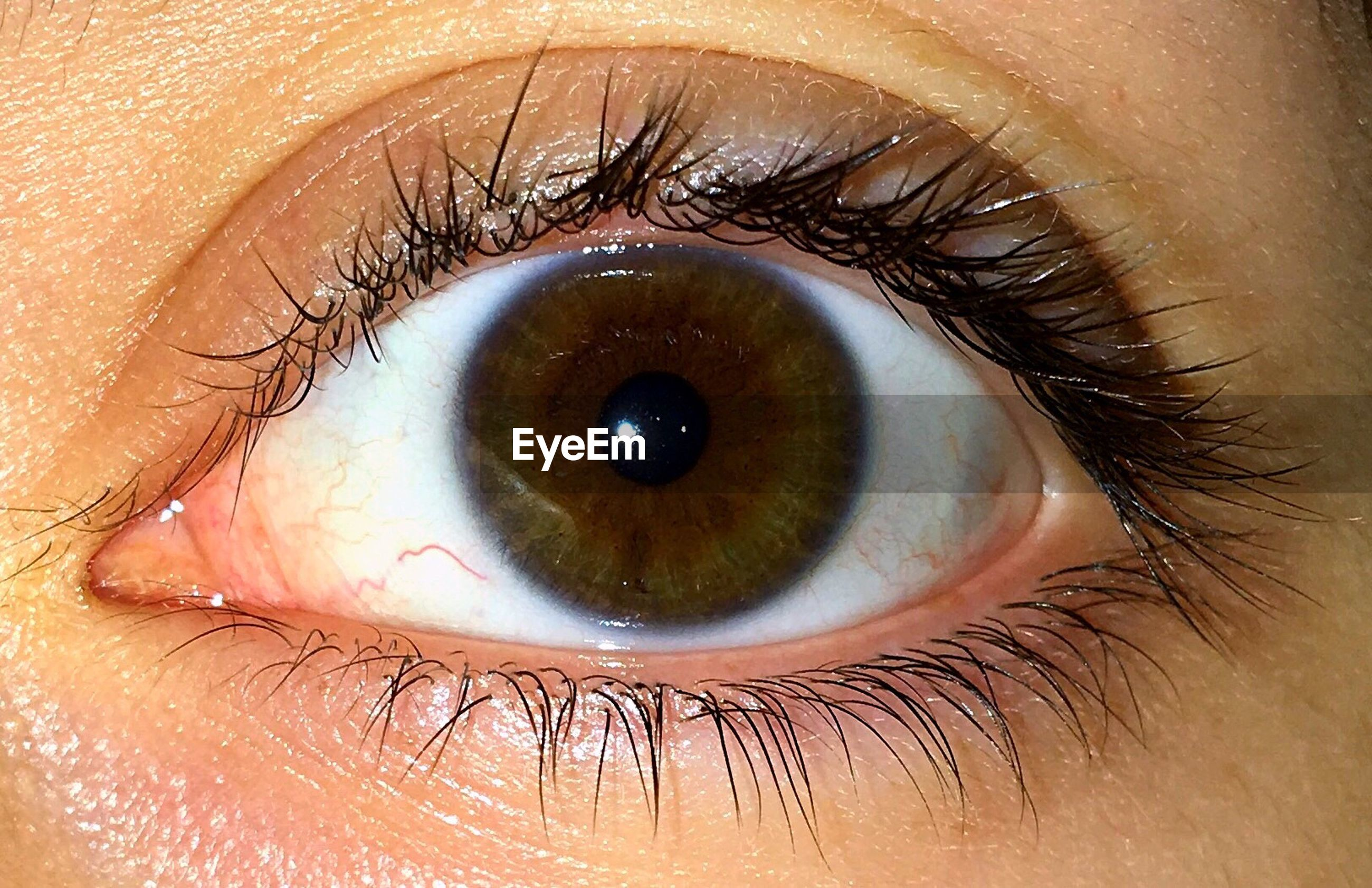 human eye, eyelash, eyeball, eyesight, close-up, iris - eye, looking at camera, human body part, one person, portrait, eyelid, sensory perception, real people, day, eyebrow, outdoors, hazel eyes, one man only, adult, people, adults only
