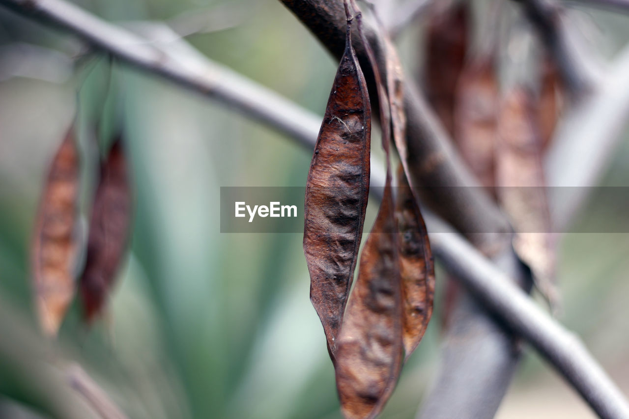 leaf, plant part, focus on foreground, close-up, day, dry, no people, selective focus, plant, nature, brown, outdoors, change, leaves, metal, growth, autumn, beauty in nature, vulnerability, barrier, dried