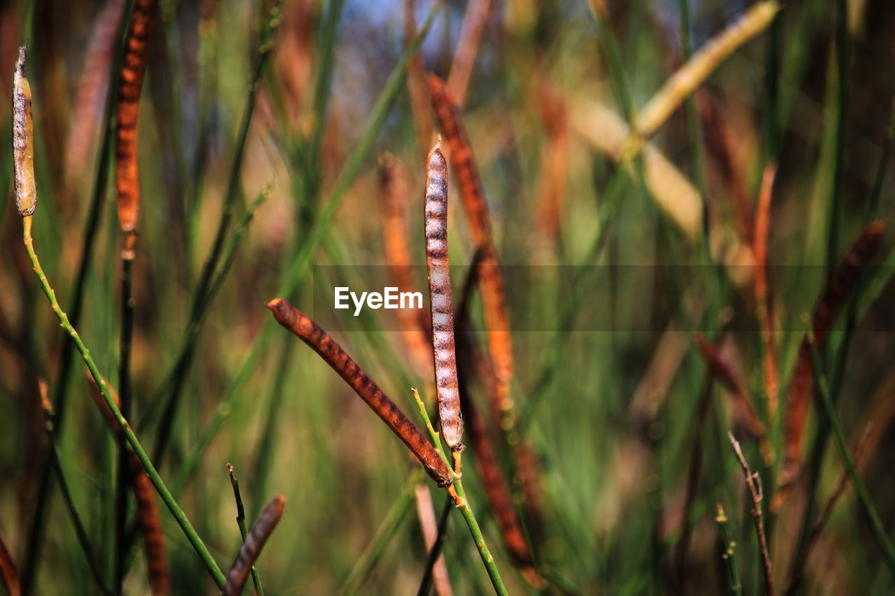 plant, one animal, animal, nature, animal themes, insect, beauty in nature, focus on foreground, day, close-up, animal wildlife, animals in the wild, invertebrate, growth, no people, green color, grass, outdoors, caterpillar, animal wing, blade of grass