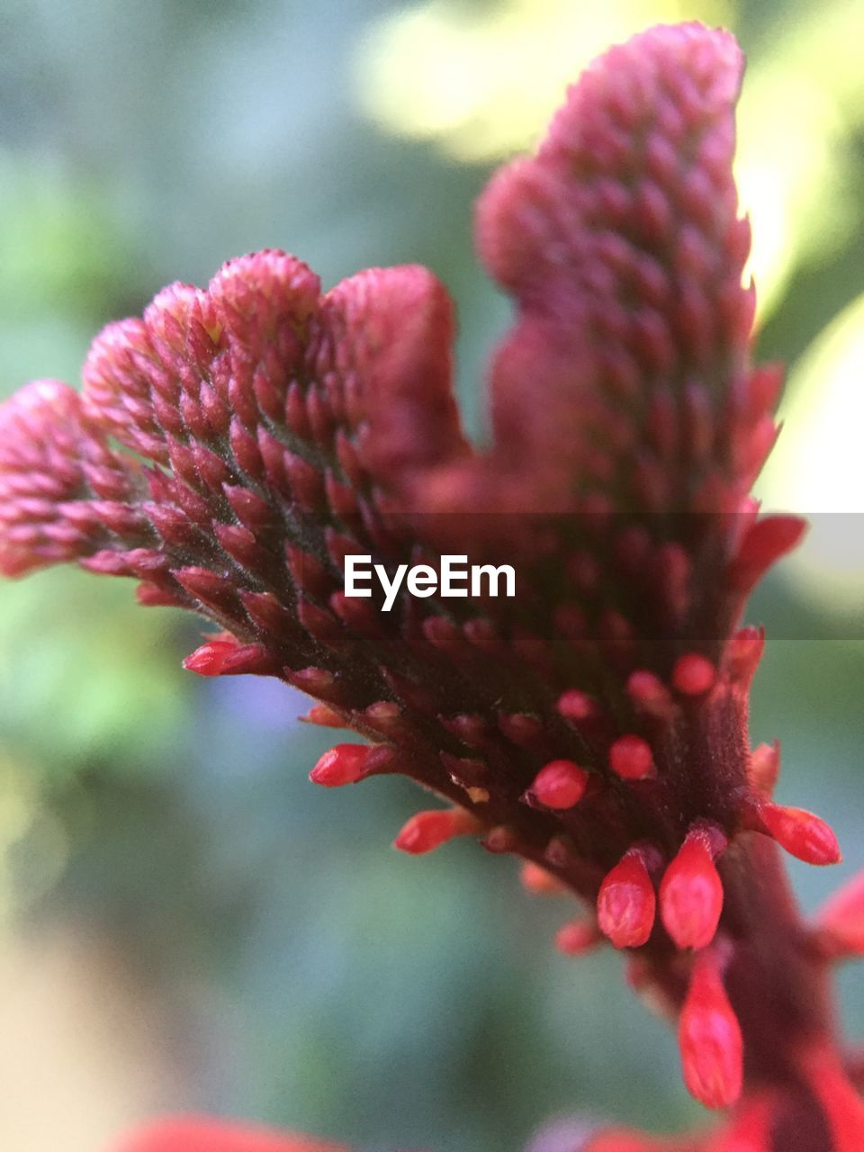 flower, red, growth, nature, fragility, petal, beauty in nature, pink color, close-up, plant, focus on foreground, blooming, flower head, outdoors, no people, freshness, day, eastern purple coneflower