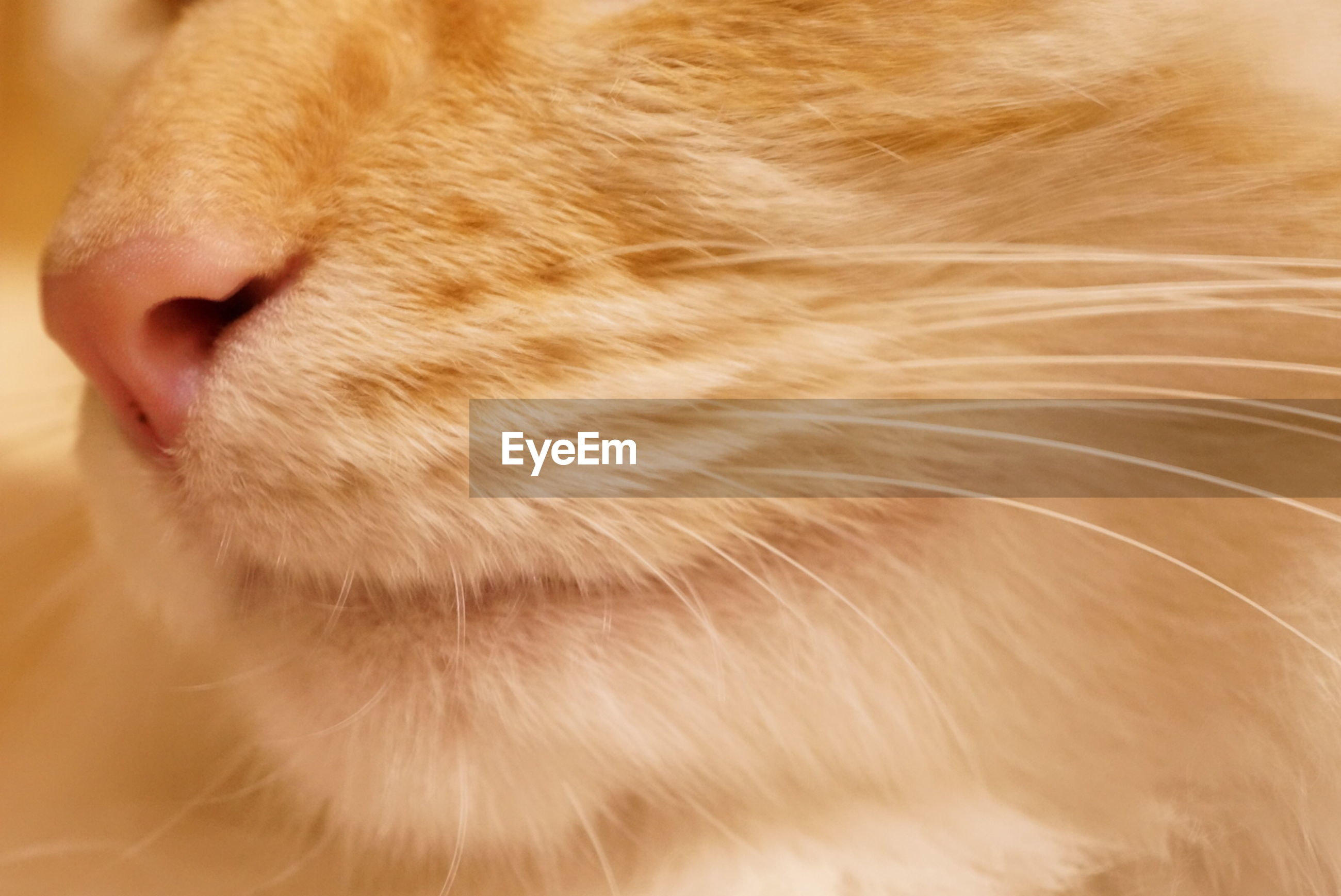 domestic animals, one animal, mammal, pets, animal themes, close-up, animal head, domestic cat, animal body part, animal hair, cat, whisker, feline, part of, brown, indoors, focus on foreground, eyes closed, dog, looking away