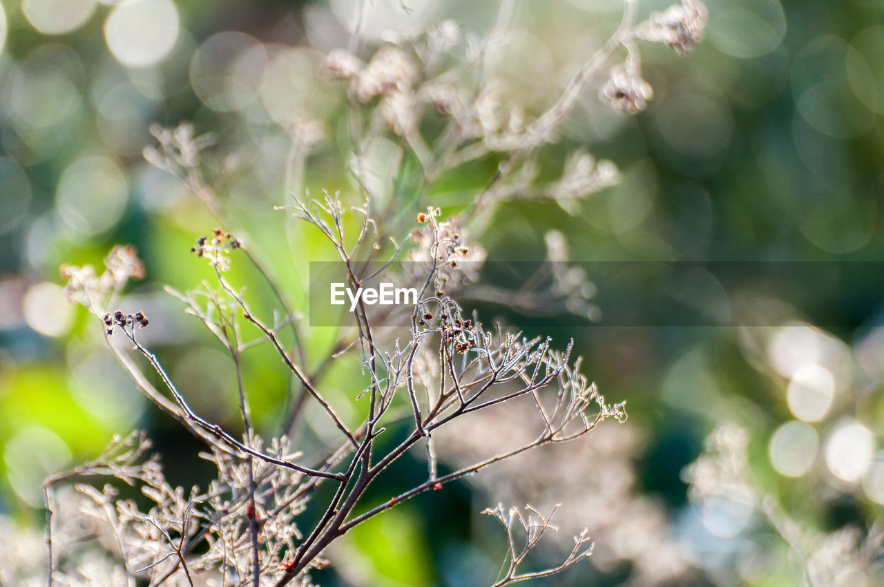 nature, day, no people, outdoors, growth, plant, close-up, beauty in nature, fragility, animal themes, flower