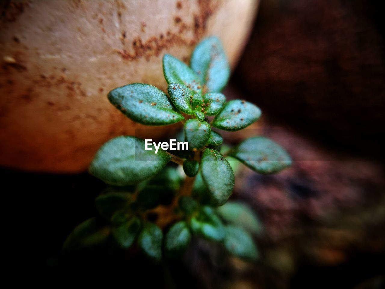growth, plant, close-up, leaf, plant part, beauty in nature, nature, selective focus, no people, freshness, green color, day, outdoors, fragility, vulnerability, focus on foreground, food, fruit, food and drink, flower