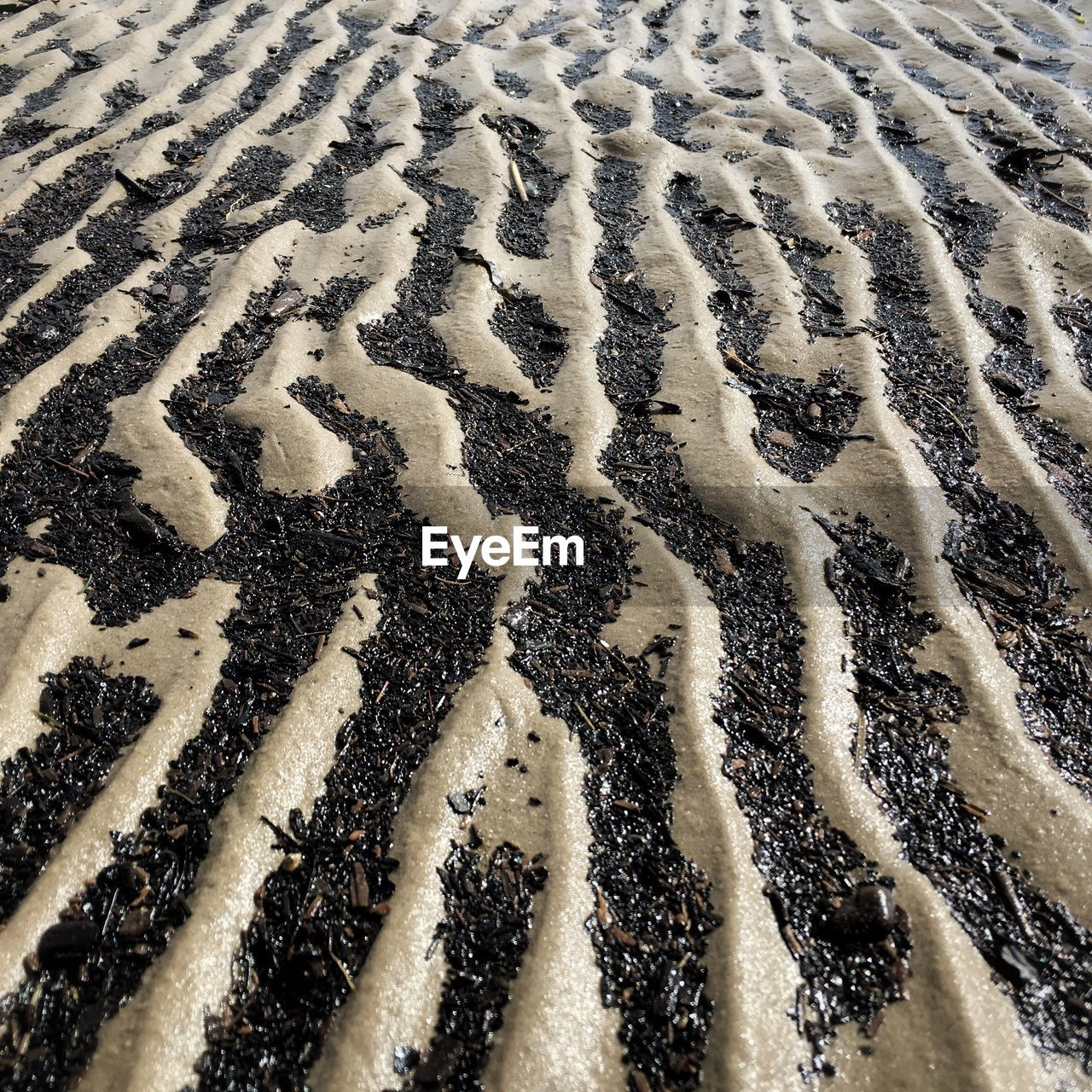 full frame, backgrounds, pattern, sand, no people, day, nature, beach, outdoors, close-up