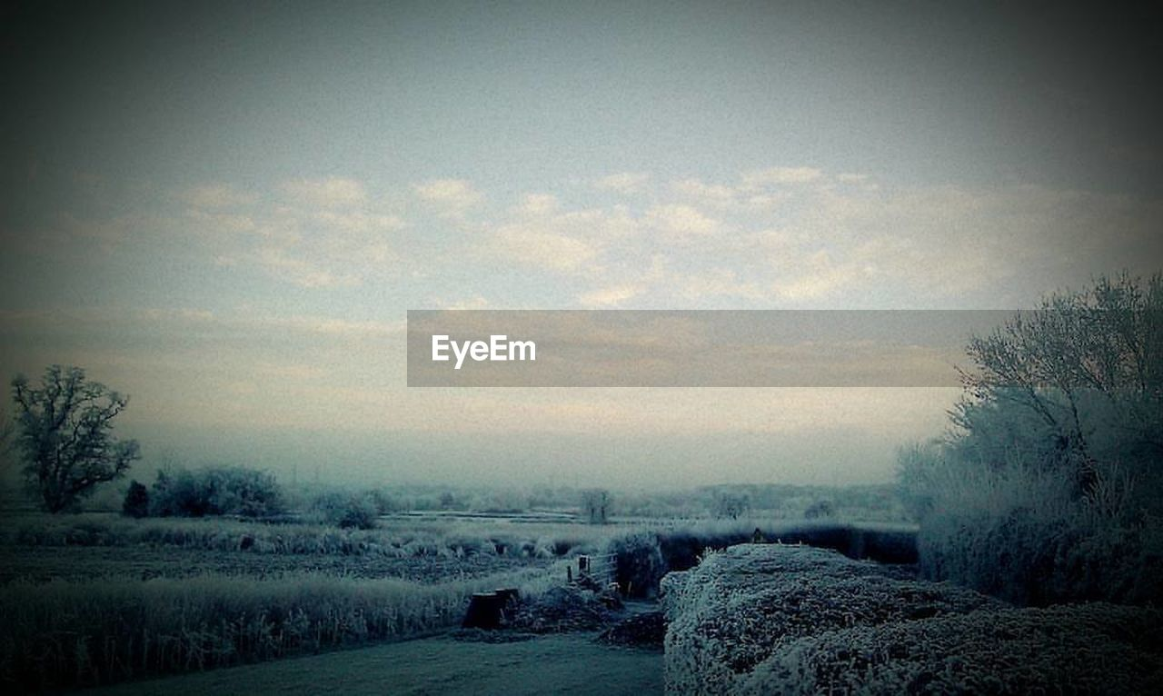tranquil scene, tranquility, nature, winter, landscape, snow, weather, beauty in nature, field, cold temperature, no people, scenics, sky, tree, bare tree, outdoors, day