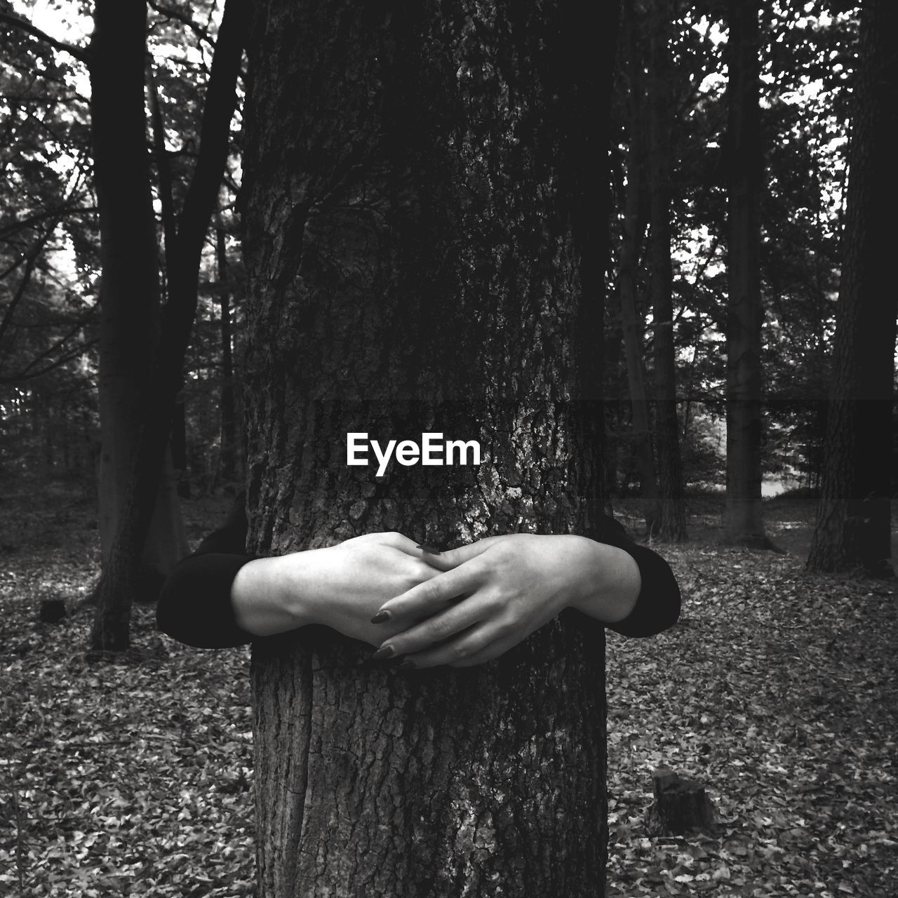 View of hands hugging tree in forest